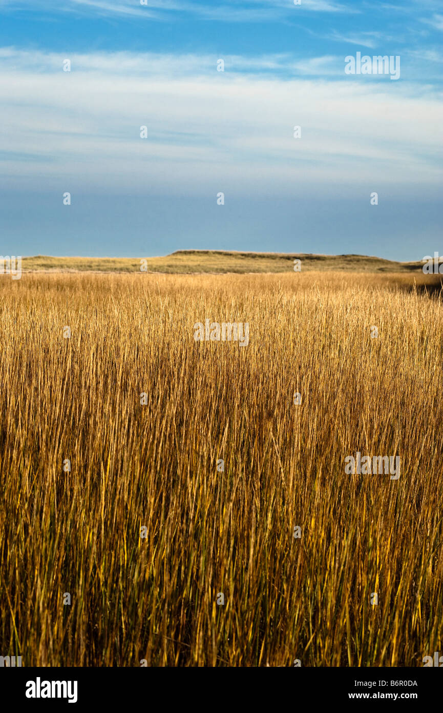 Seagrass and dune landscape backing the Cape Cod National Seashore Cape Cod MA USA - Stock Image