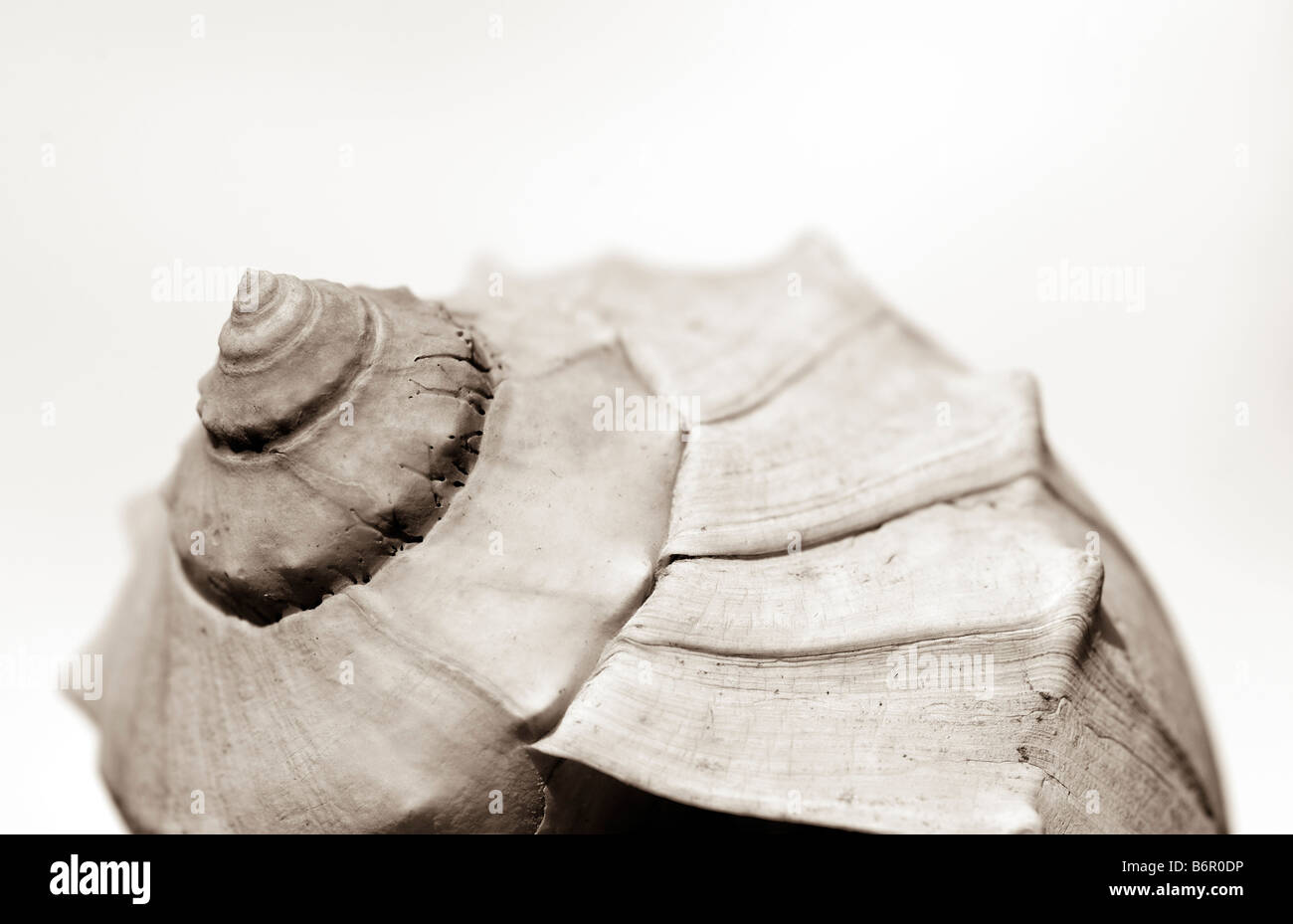 Mollusk shell - Stock Image