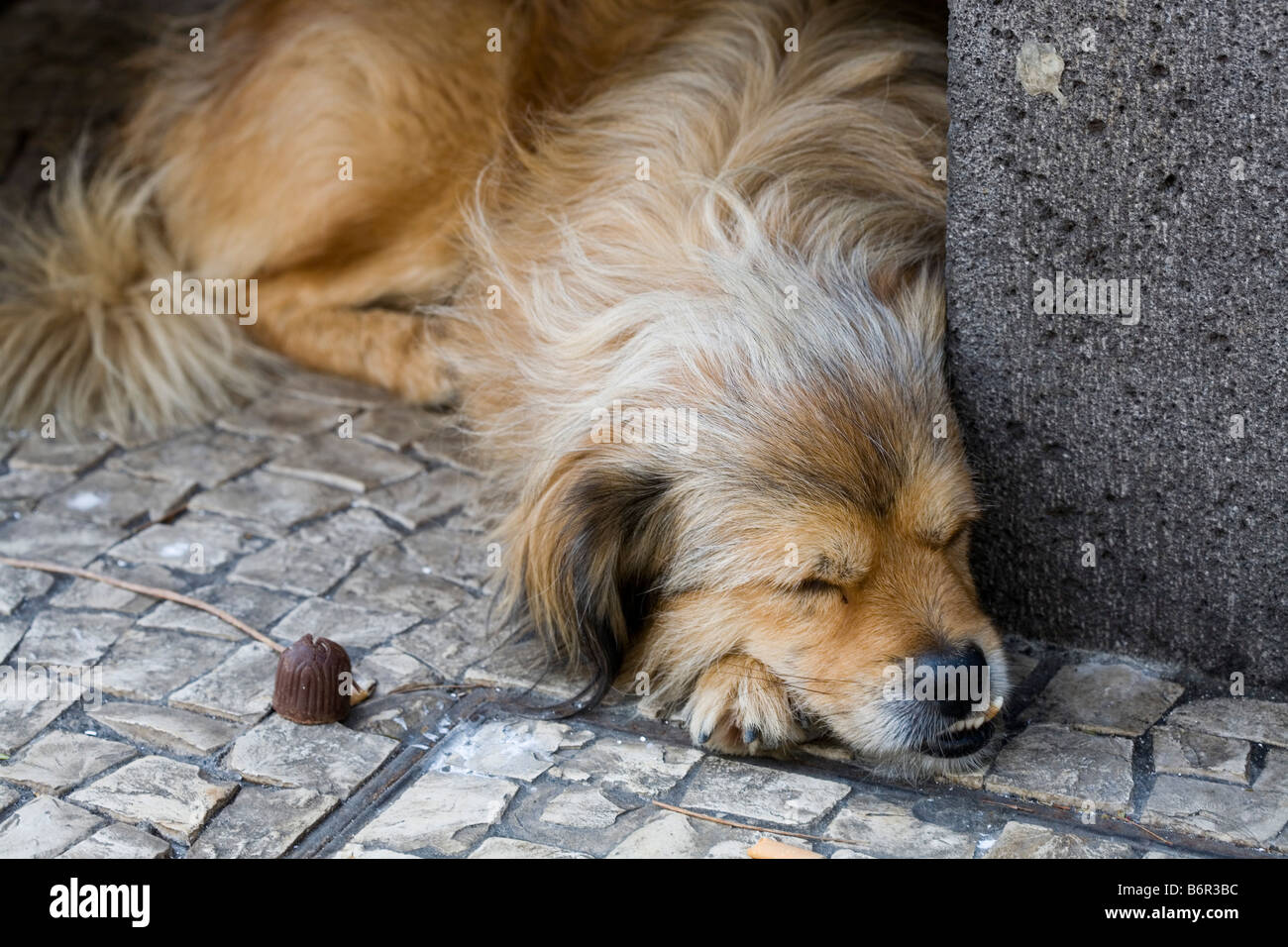 stray dog asleep under bench in Funchal Madiera - Stock Image