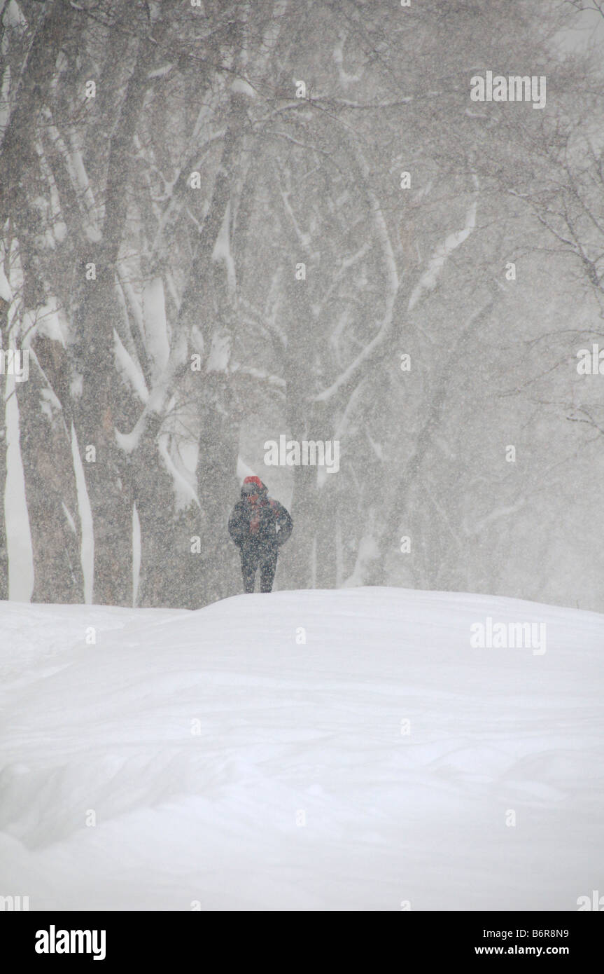 Person walking during a snow storm Montreal Canada - Stock Image