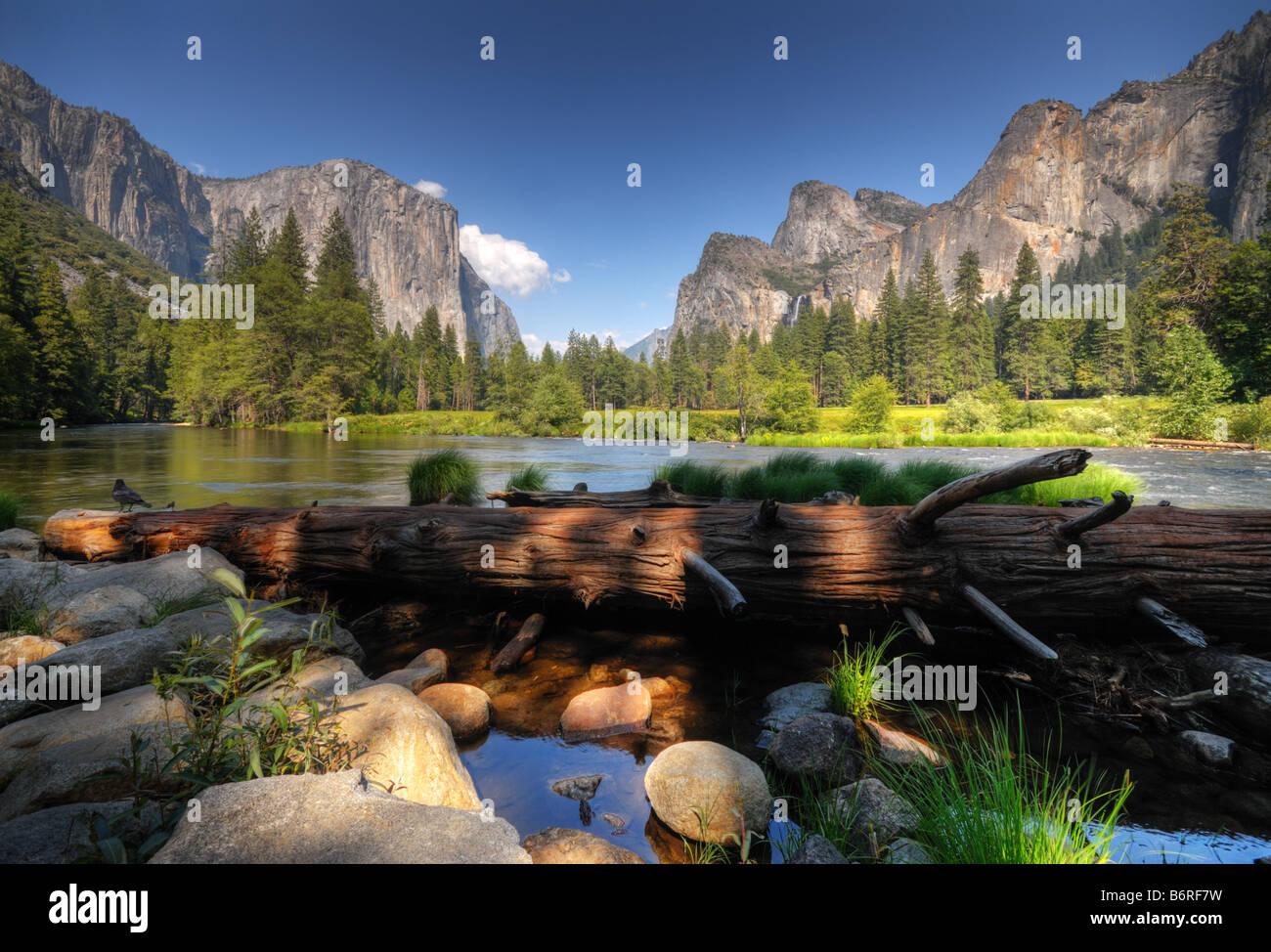 The Fallen tree of Yosemite Valley Stock Photo