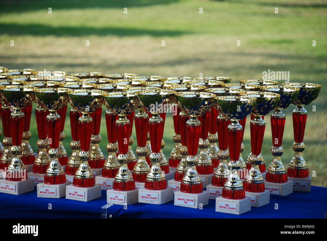 Israel International Dog Show May 17 2008 The trophy table - Stock Image