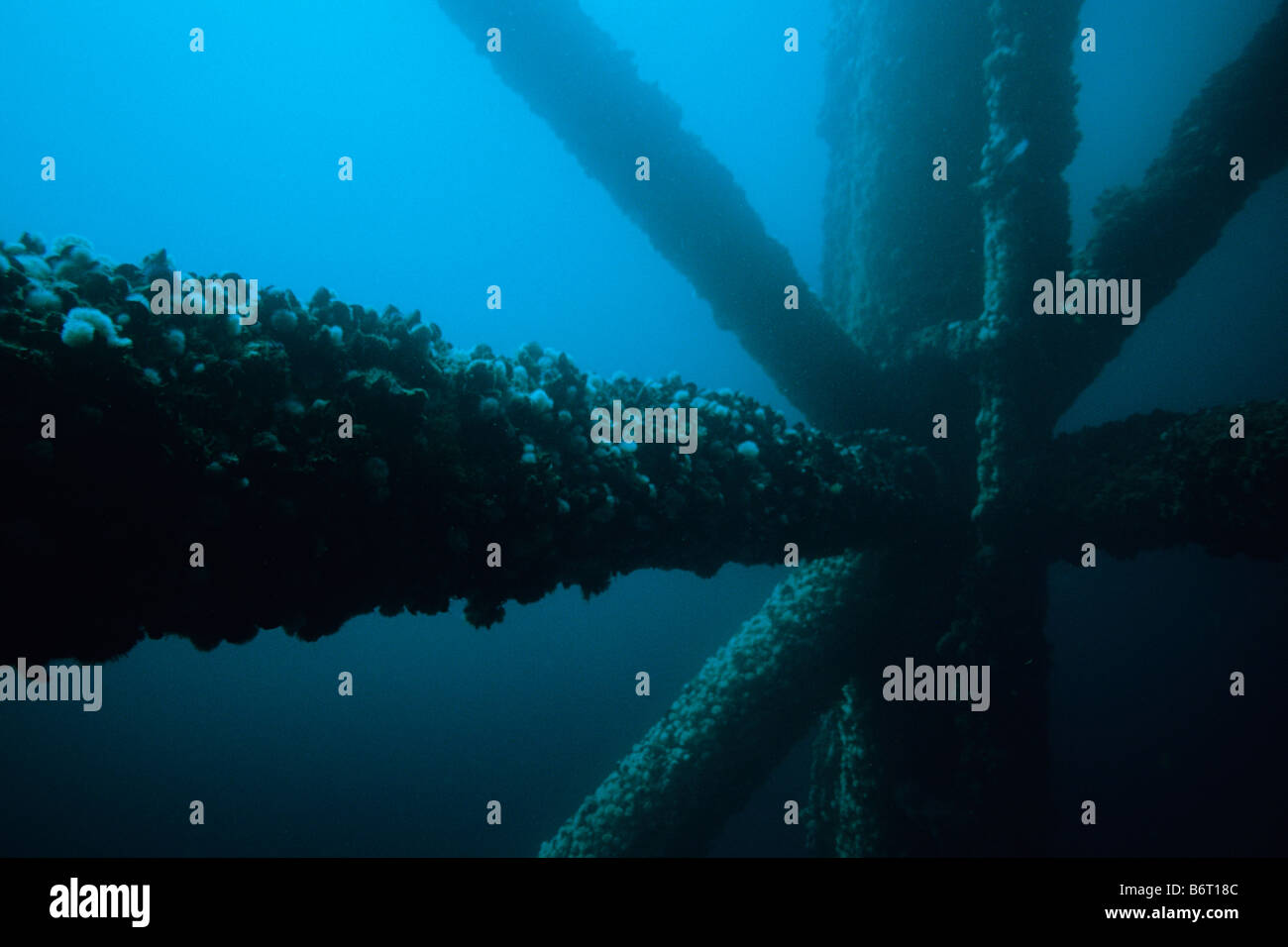 Underwater view of oil Platform Grace and pilings off of the