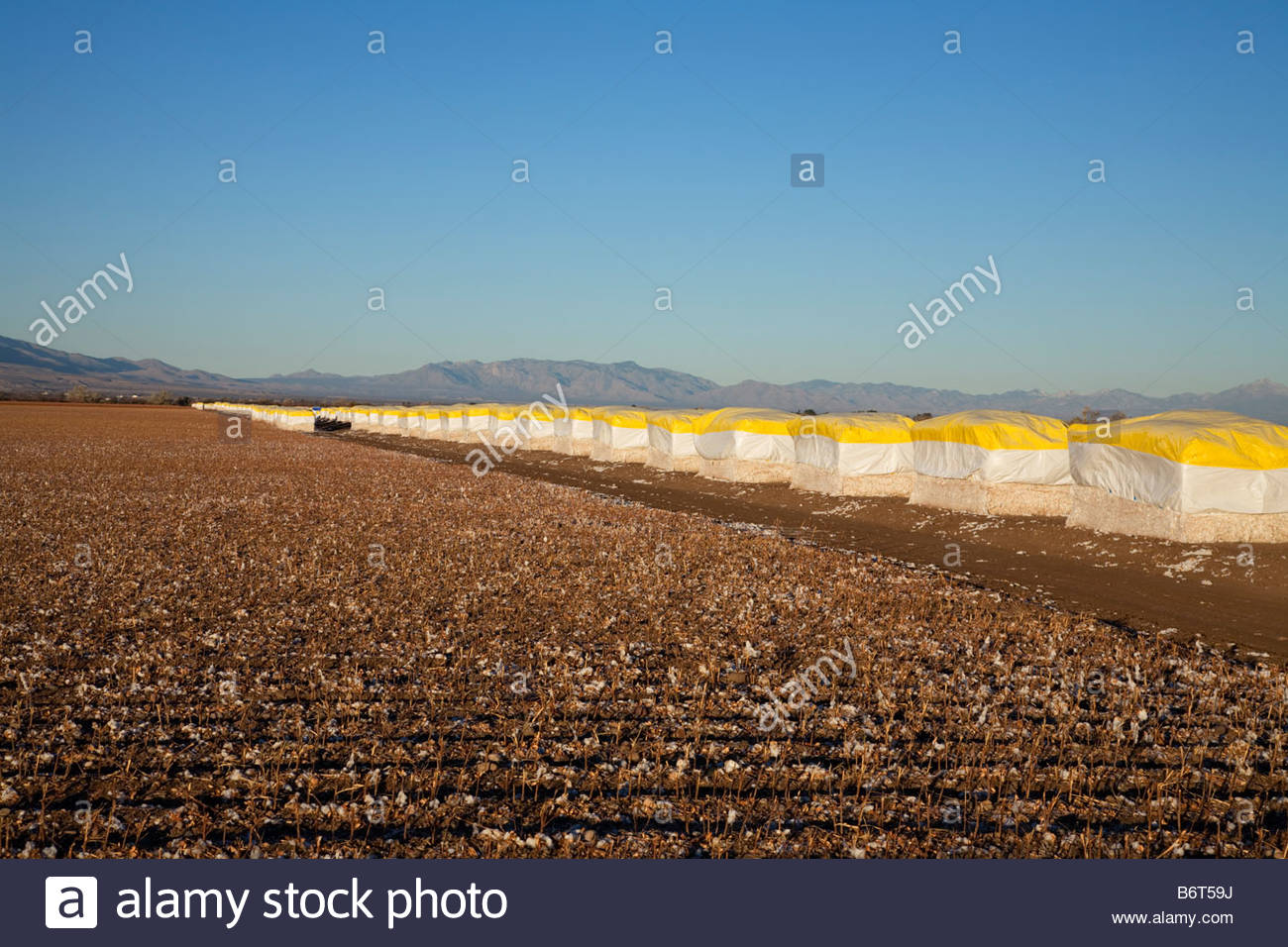 Cotton bales along picked field awaiting shipment - Stock Image