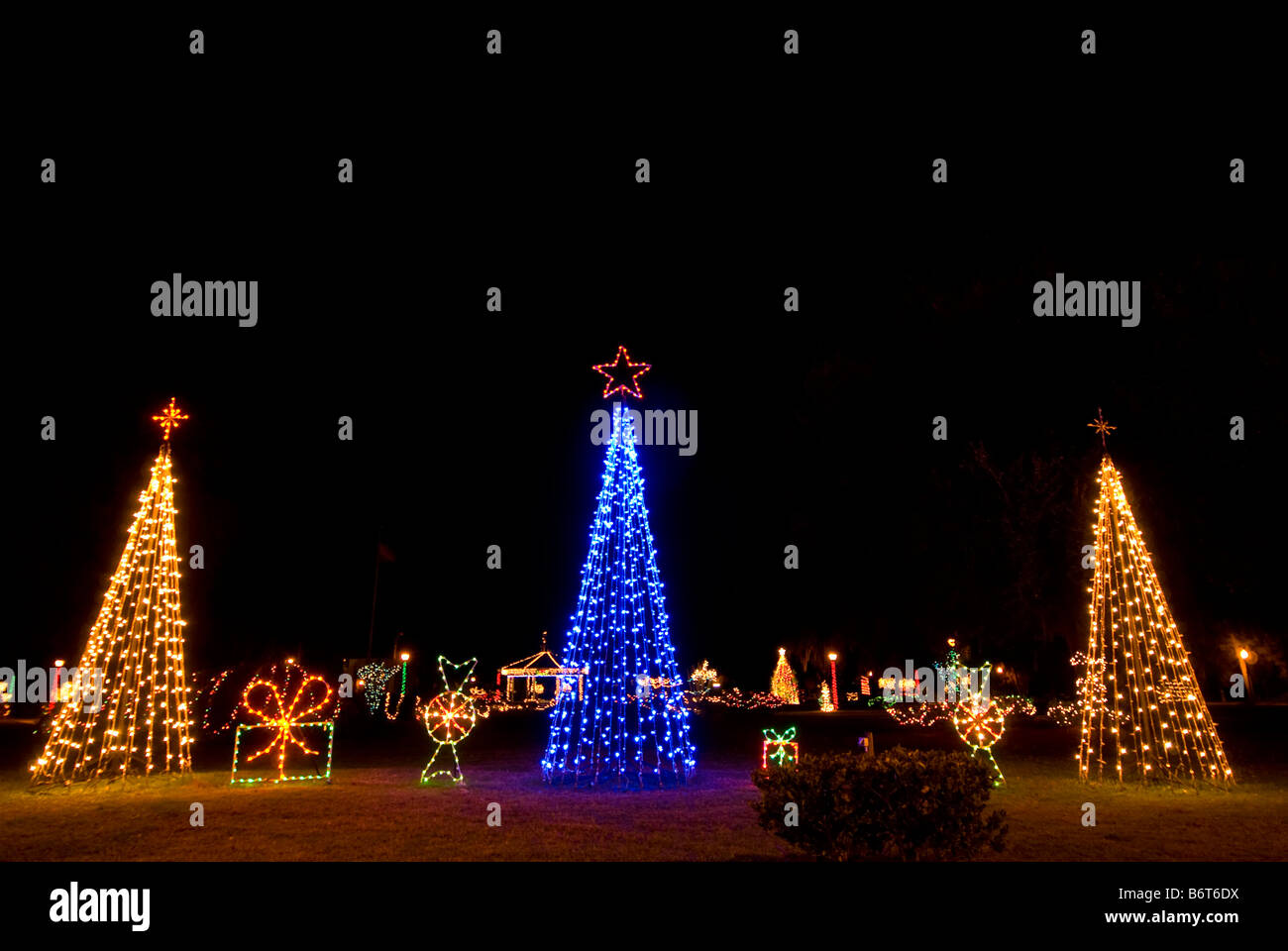 Three Christmas trees bright colors two white lights one blue light christmas tree night dramatic dark background - Stock Image