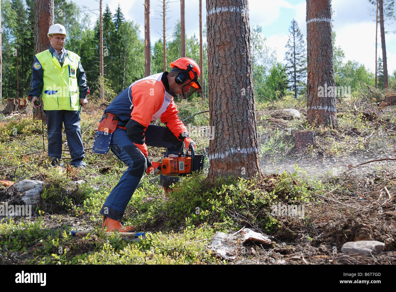 Karelia, RUSSIA – June 20, 2007: Contest of professional timber fellers Woodcutter - 2007 in the wood-cutting area - Stock Image