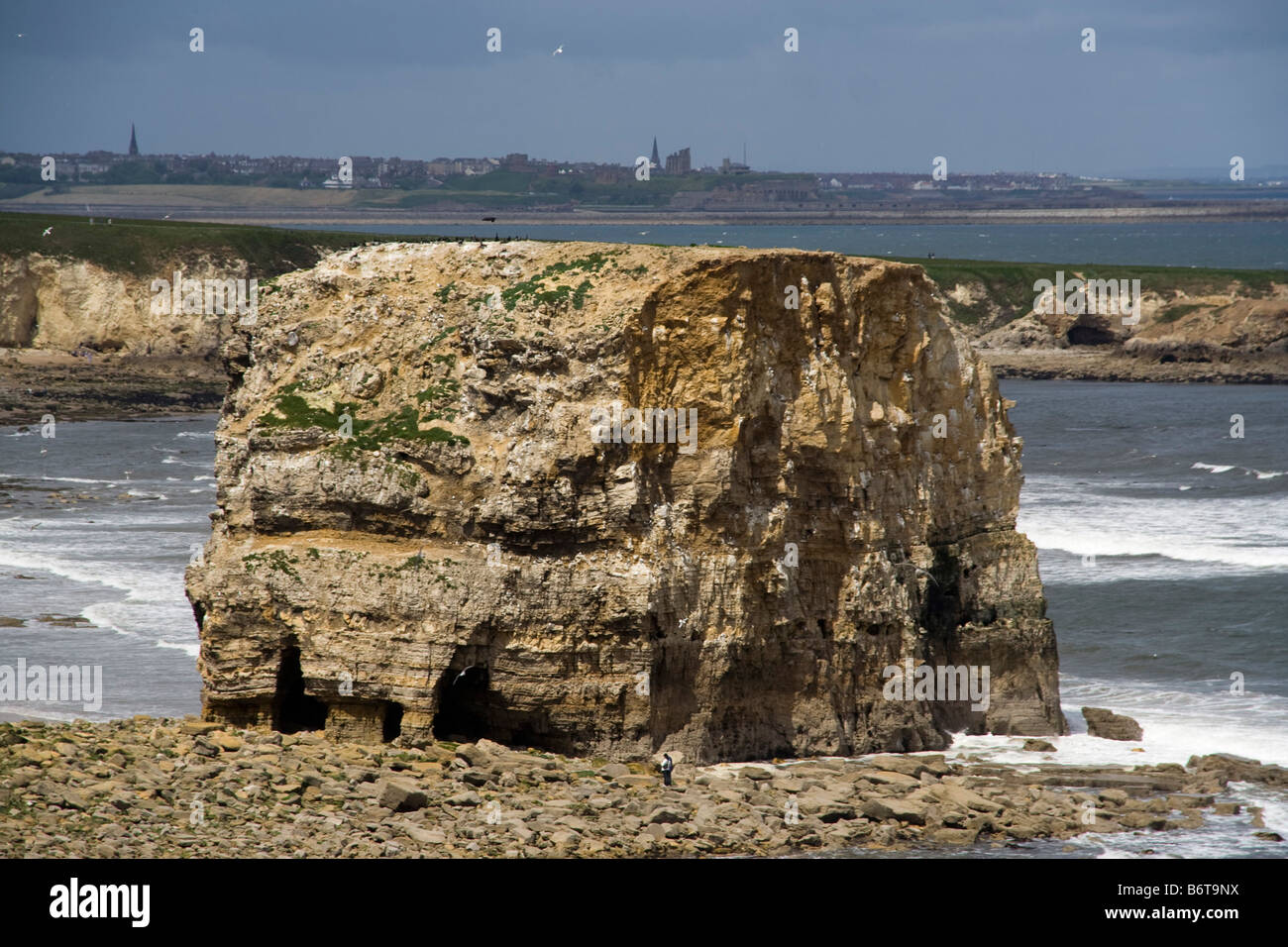 south shields the leas sea stacks sea erosion marsden rock ...