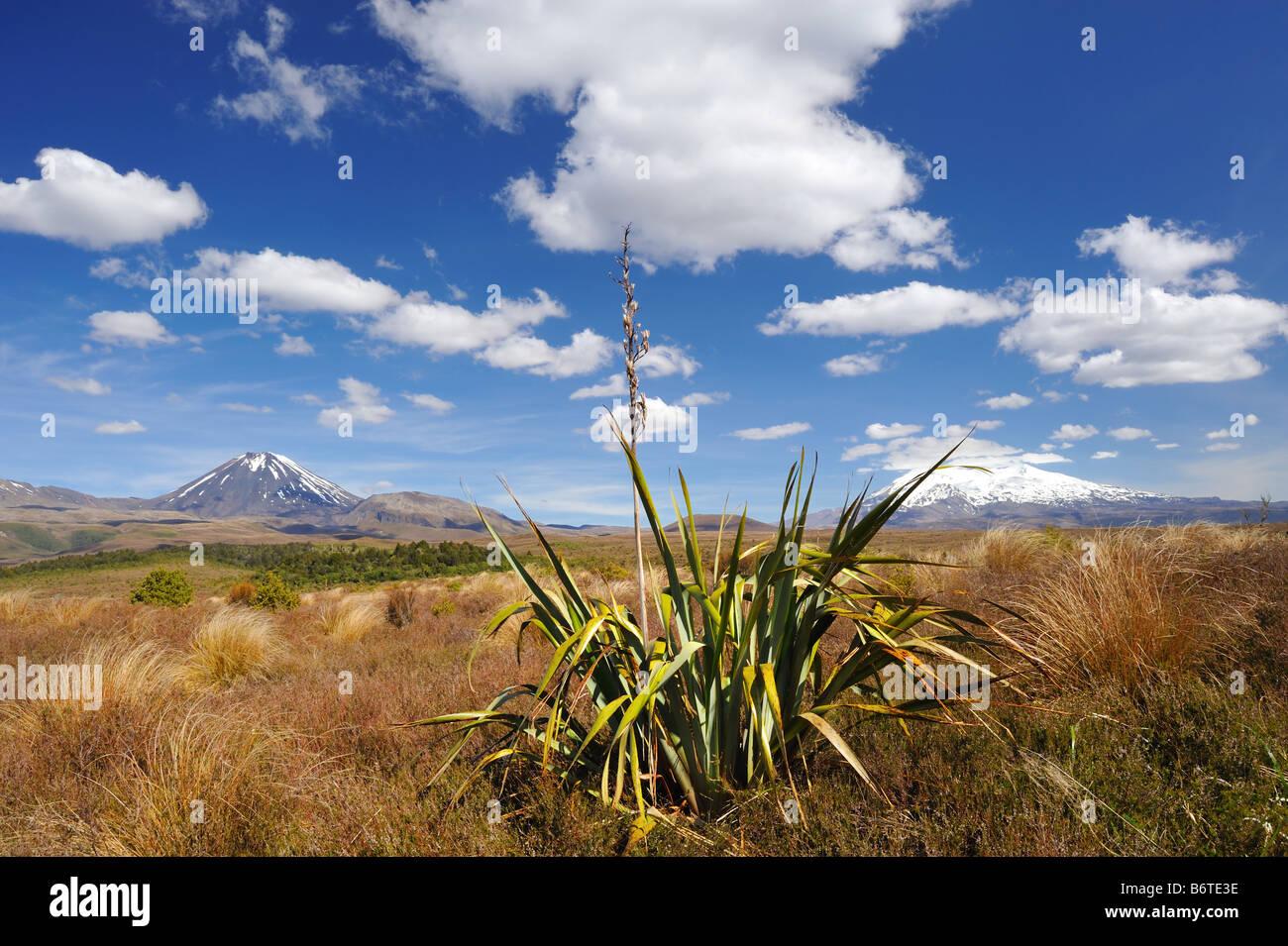 Tongariro National Park, New Zealand. Phormium in foreground - Stock Image