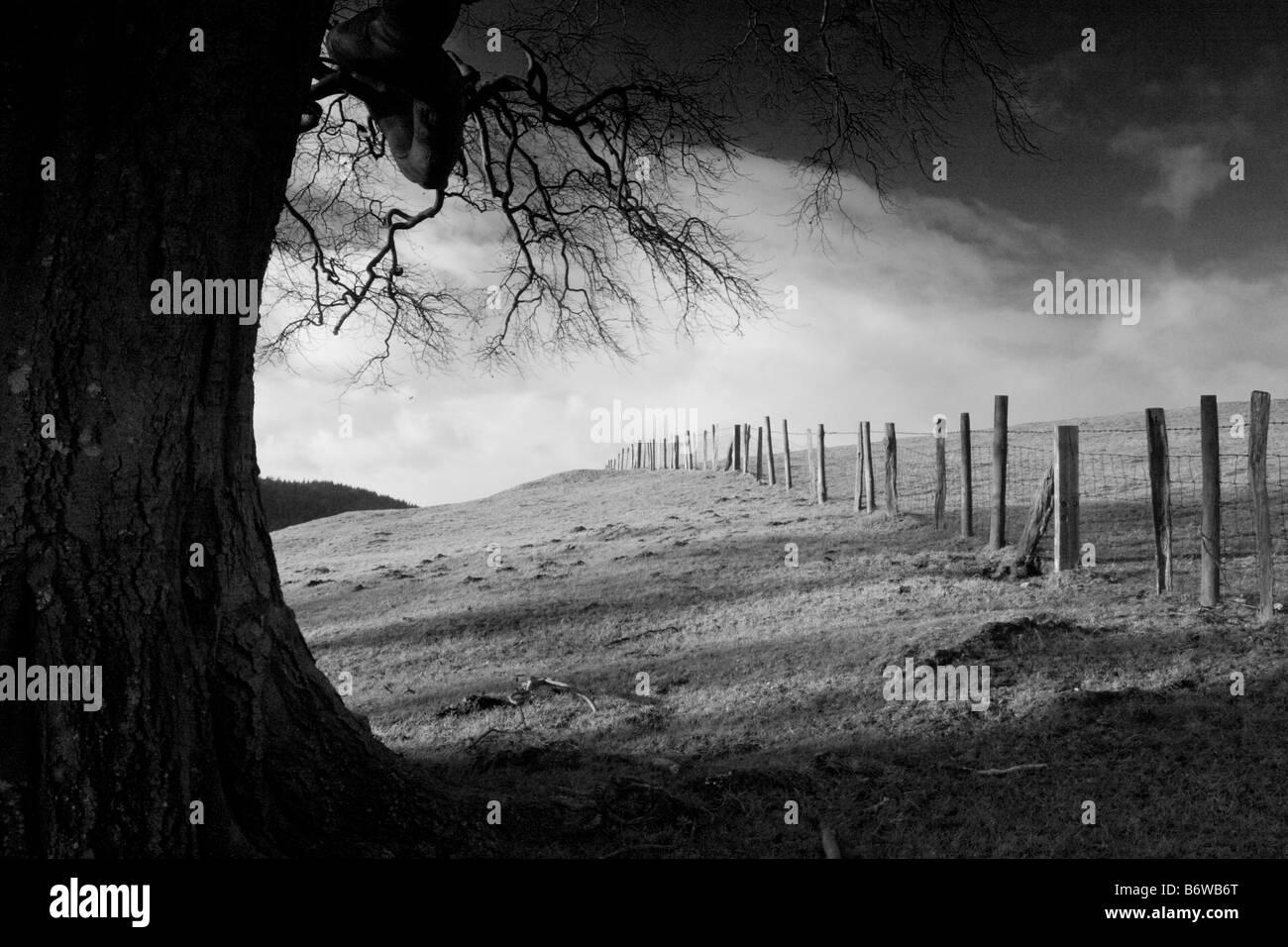 Mature beech tree in evening light Linley hill, Shropshire, England, UK - Stock Image