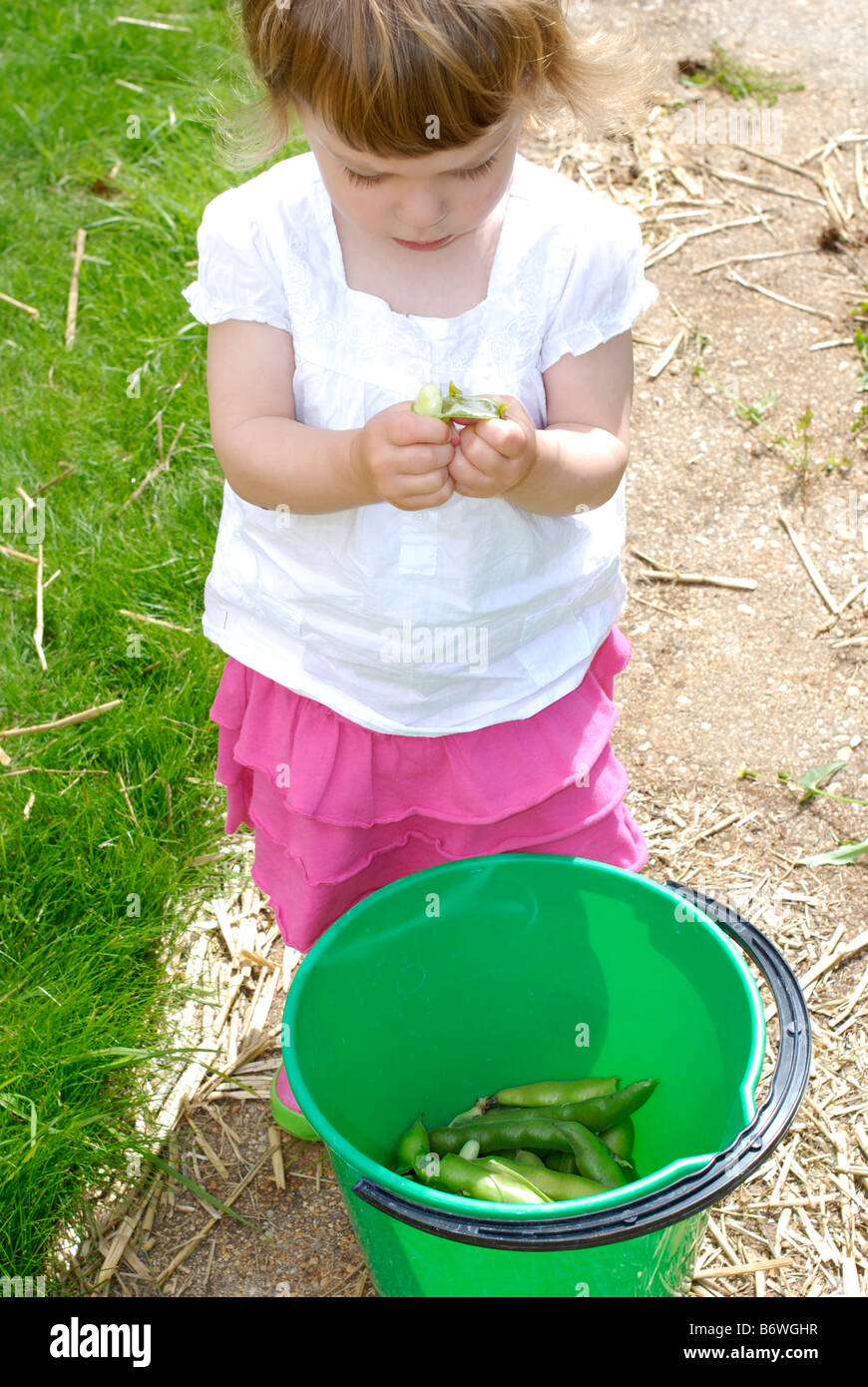Two year old girl with broad beans grown in her back garden - Stock Image