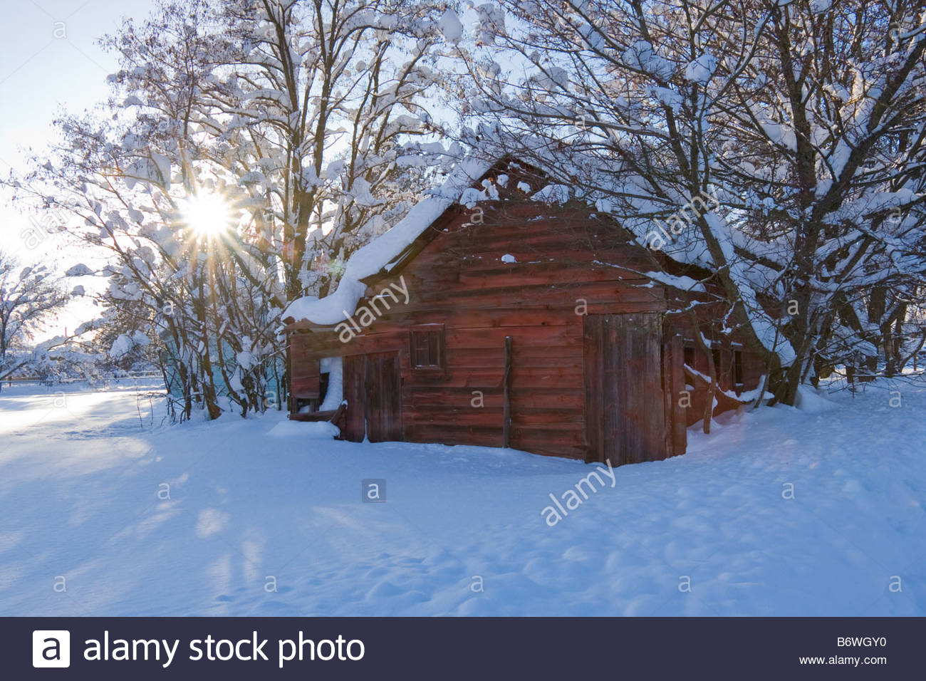 A vintage outbuilding with faded paint in a snow covered landscape with afternoon sun rays filtering through trees. - Stock Image