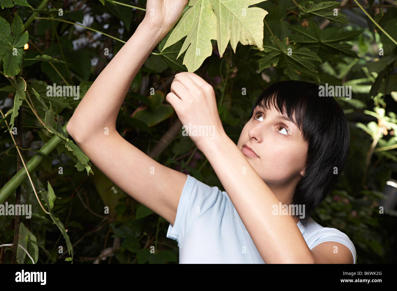 Woman Examining Leaf - Stock Image