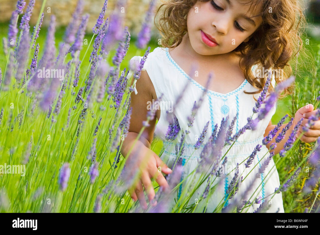 A girl looking at lavender - Stock Image