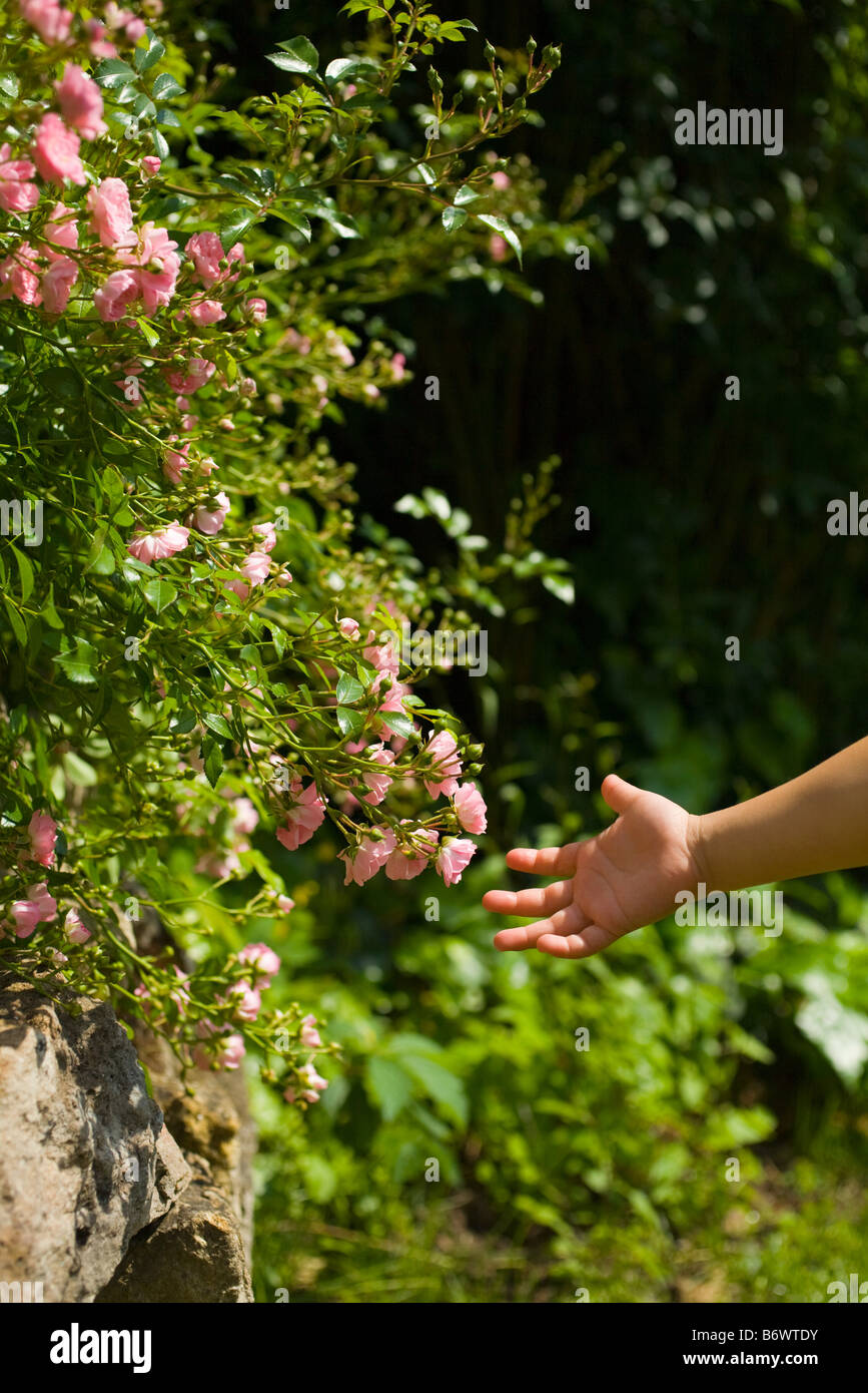 A girls hand and flowers - Stock Image