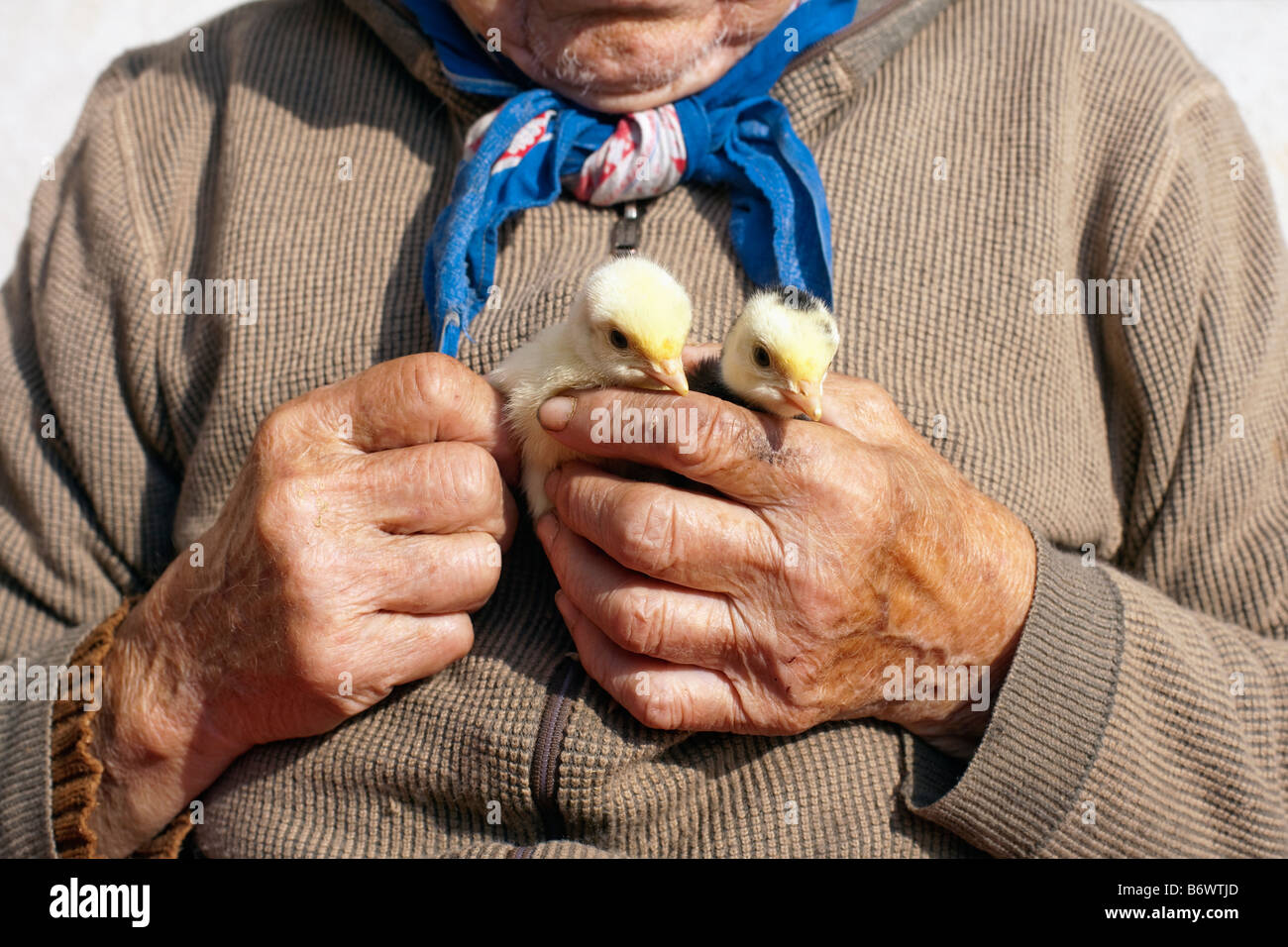 PEASANT WOMAN HOLDING POULTS IN HER HANDS - Stock Image