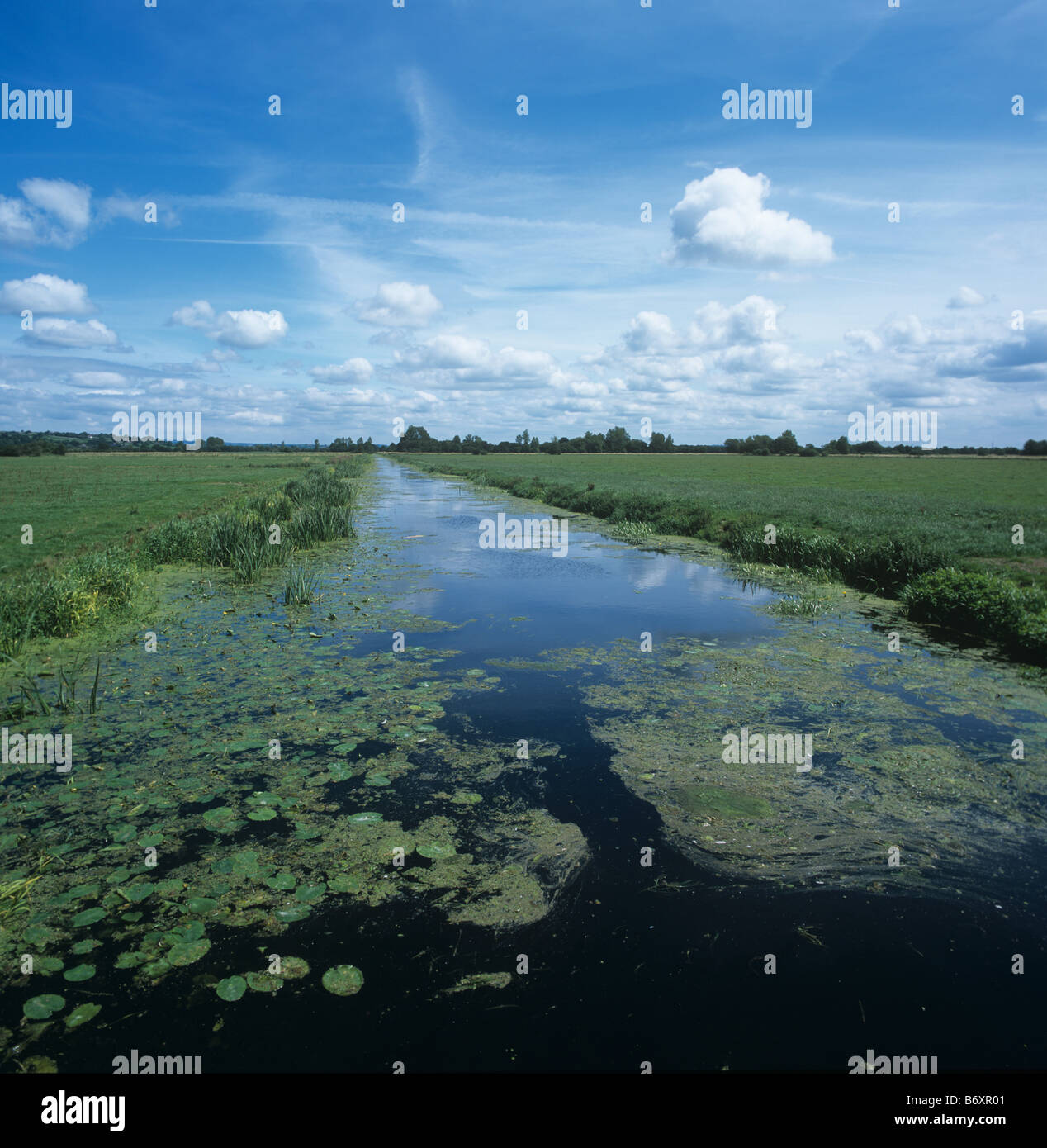Large drainage canal on the Somerset levels in summer - Stock Image