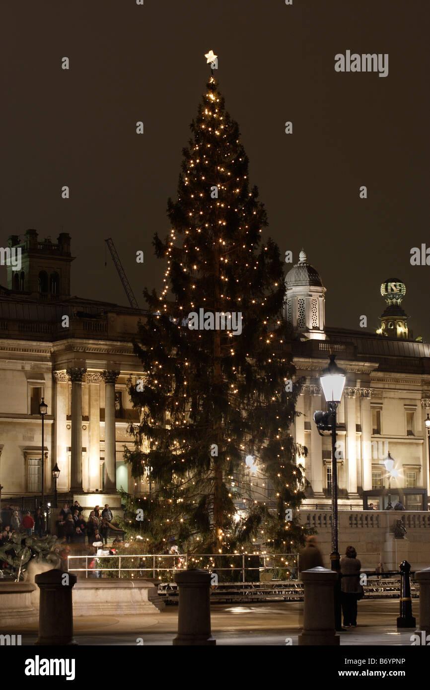 Norwegian Christmas Tree 2008 Trafalgar Square London UK Stock Photo ...