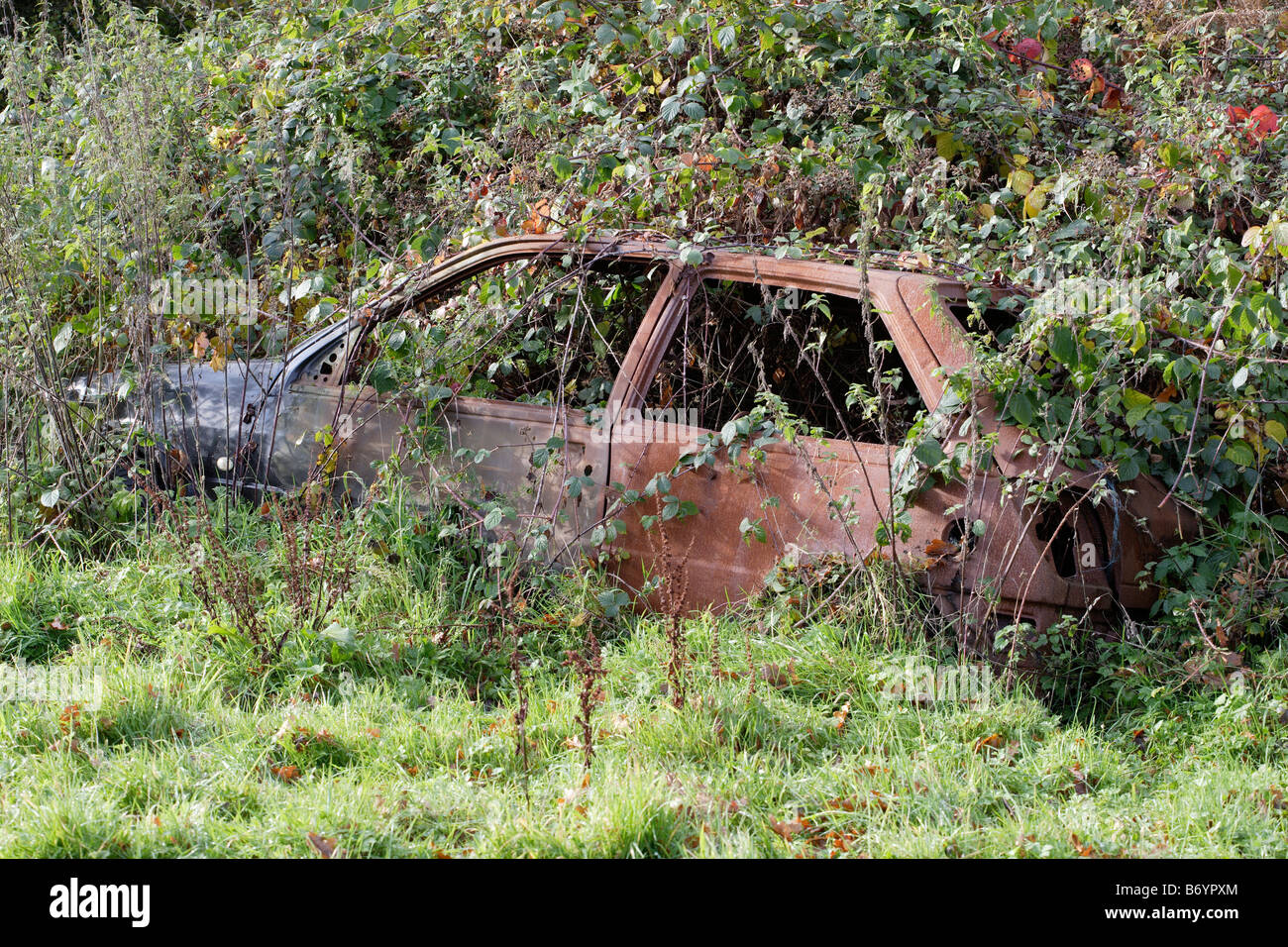 Abandoned car rusting in the hedgerow - Stock Image