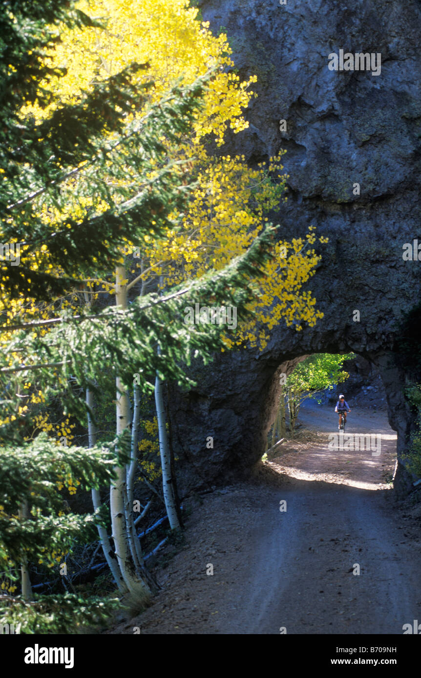A young woman pedals her mountain bike through a rock tunnel surrounded by golden aspen leaves in the San Francisco Stock Photo