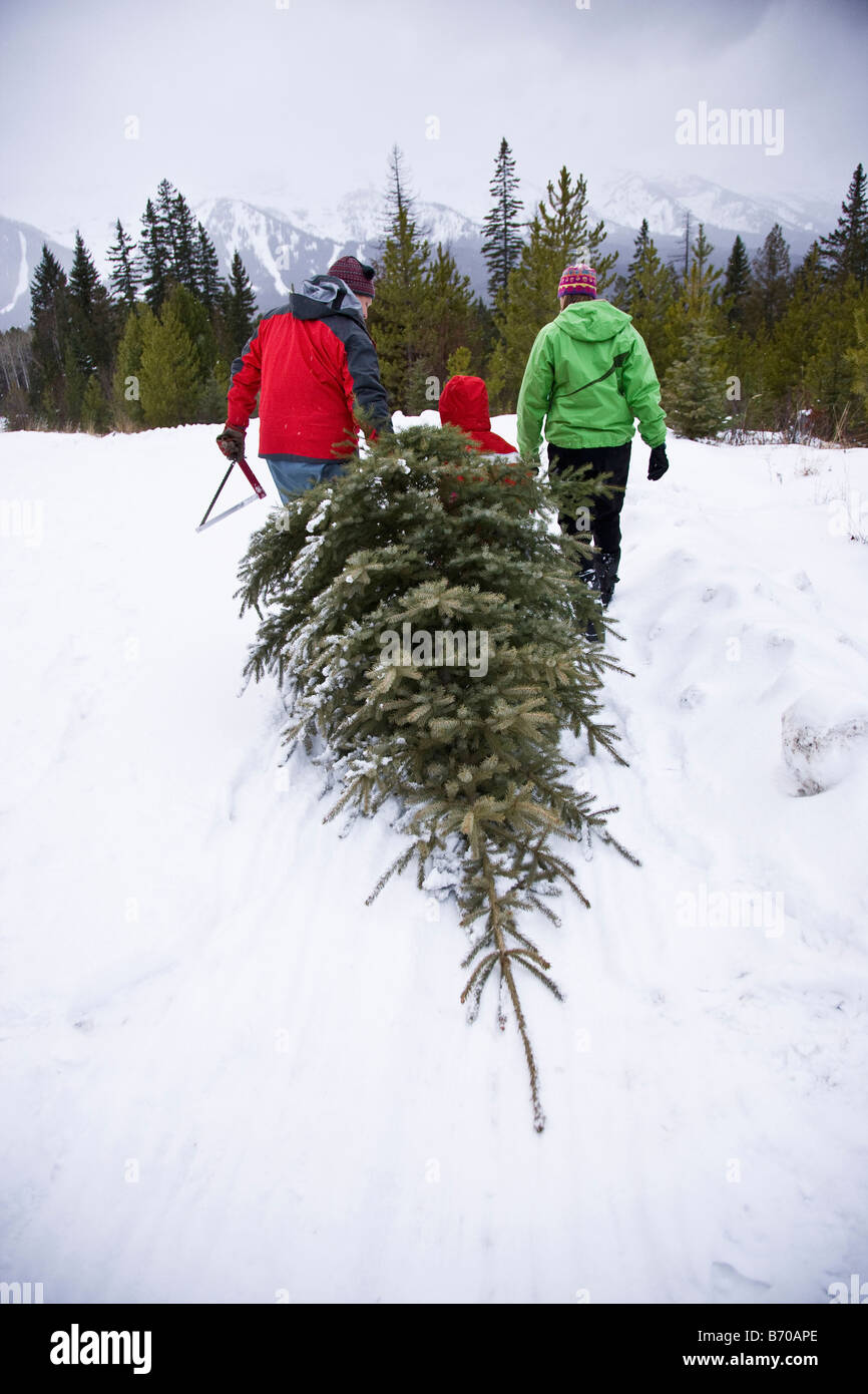 On Christmas Tree Farm Stock Photos & On Christmas Tree Farm Stock ...