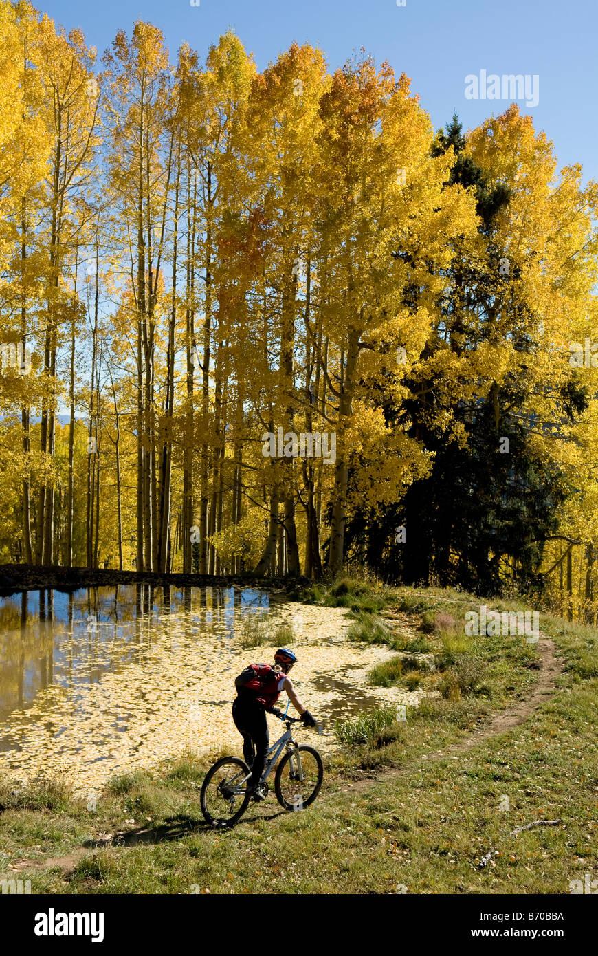 Woman mountain biking past lake with yellow aspen leaves, San Juan National Forest, Colorado. - Stock Image