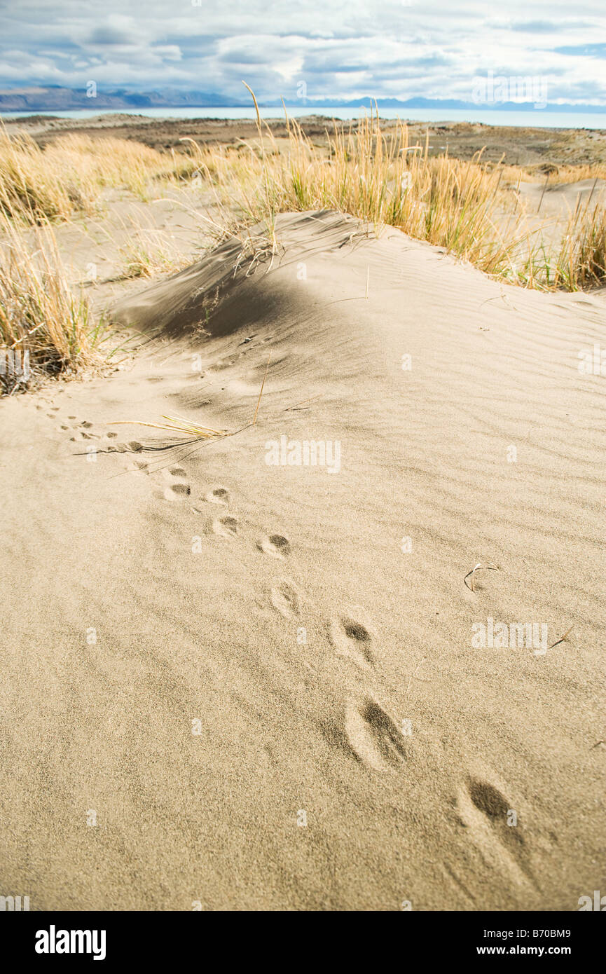 Tracks across the sand with Lago Argentino in the distance, Calafate, Argentina. - Stock Image