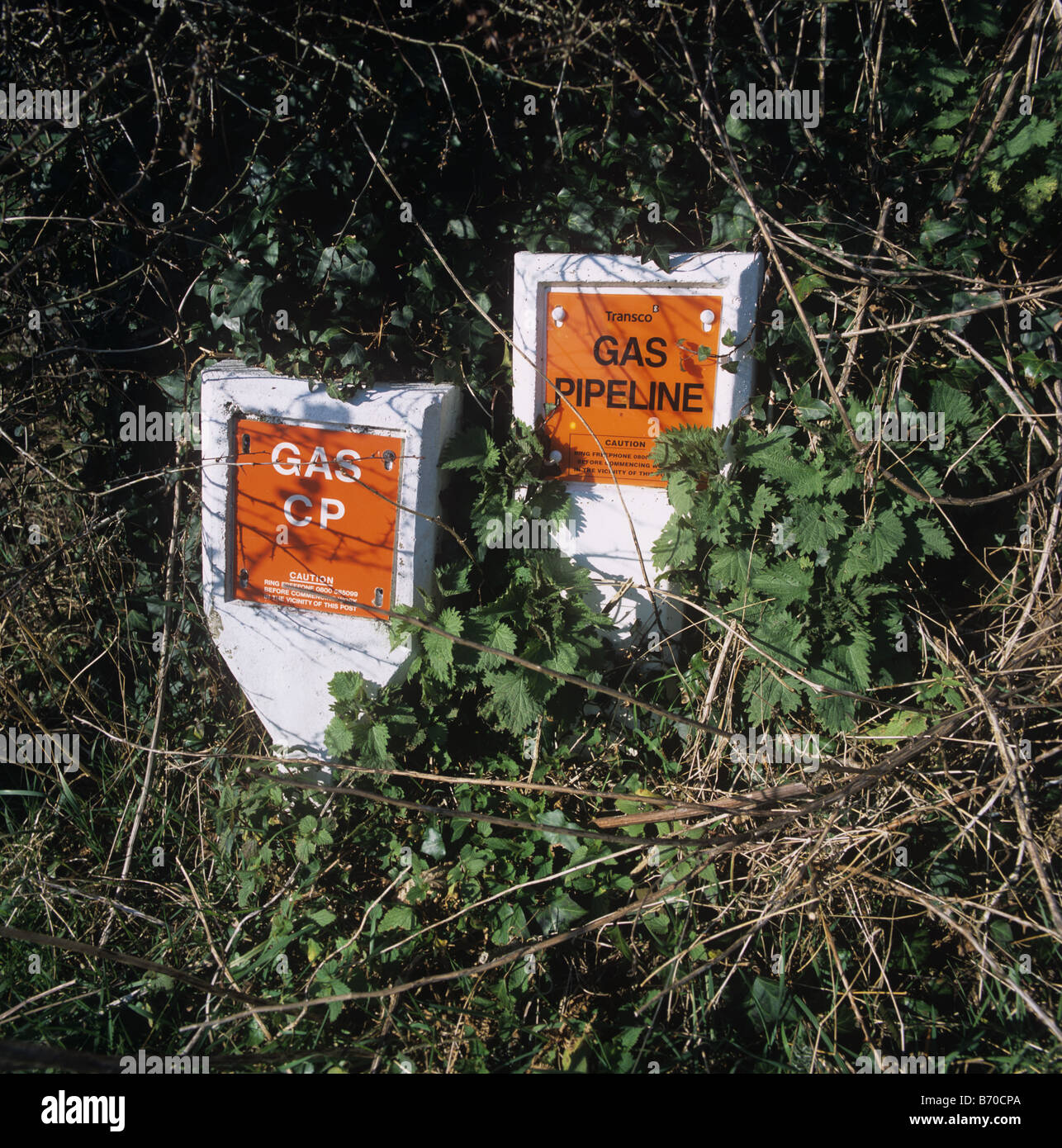 Gas pipeline markers on short concrete posts placed in Devon hedgerow - Stock Image