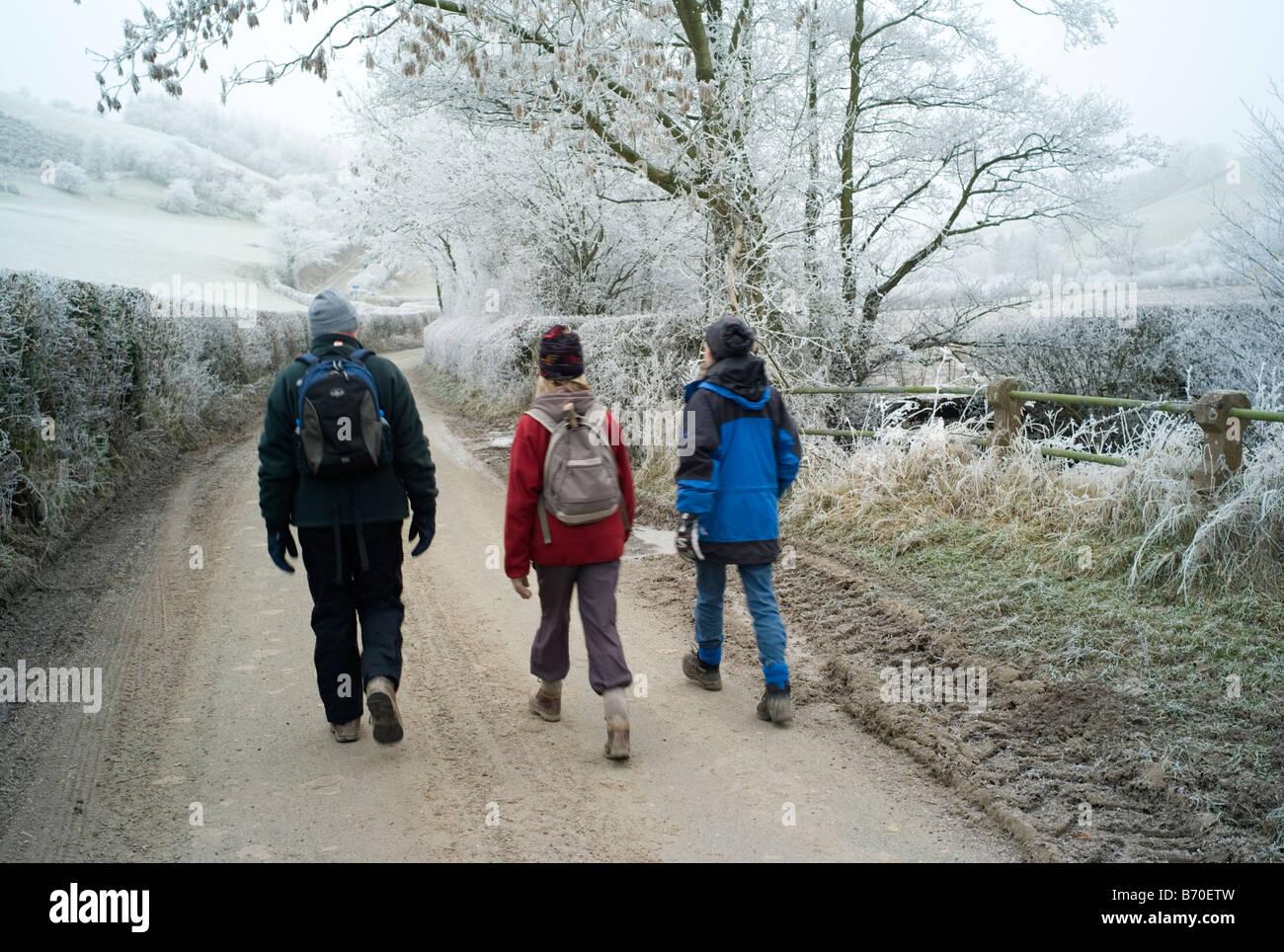Winter walk UK Stock Photo: 21524633 - Alamy