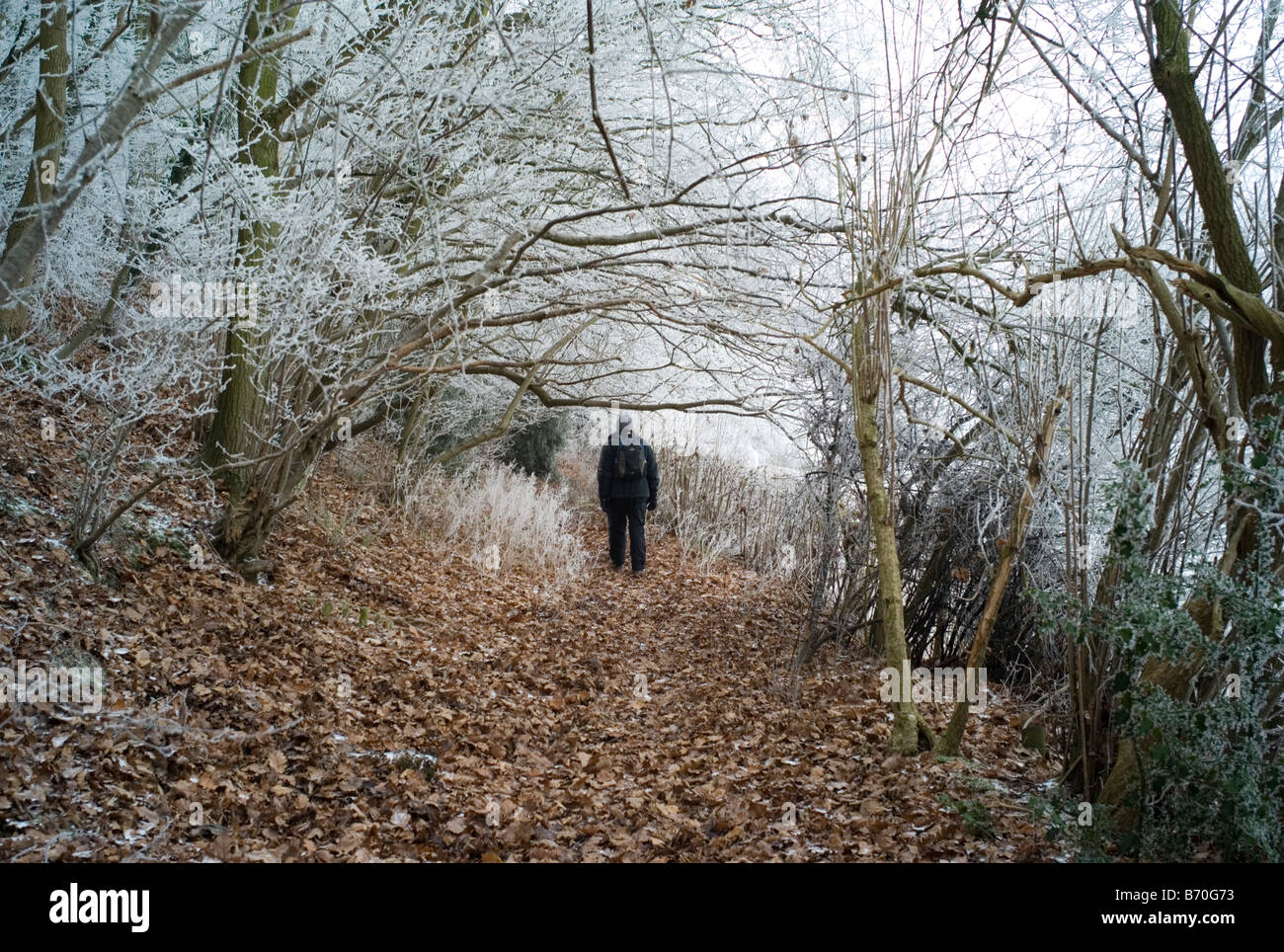 Solitary figure in winter woodland, UK - Stock Image