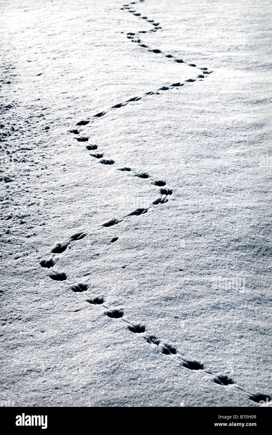 Animal tracks in fresh snow, sud-Touraine, France. Stock Photo