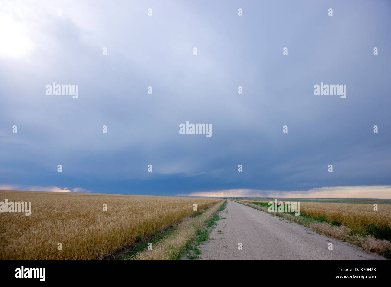 Road and wheat field in Wakeeney Kansas Stock Photo