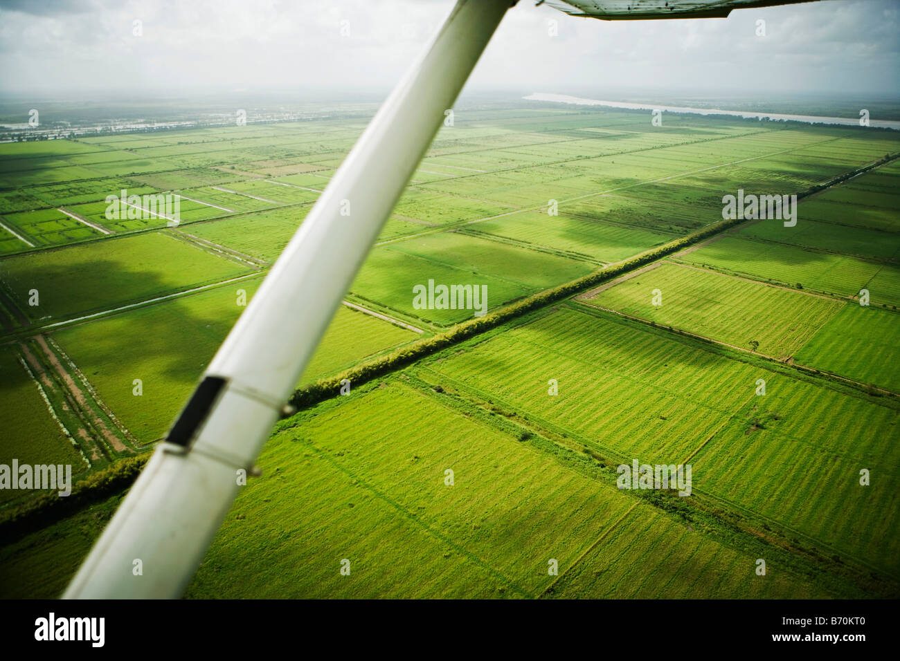 Suriname, Paramaribo, Aerial of former plantations. Now undeveloped. - Stock Image