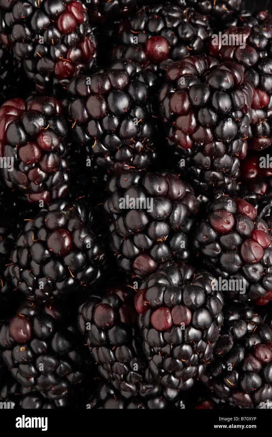 Blackberries Stock Photo