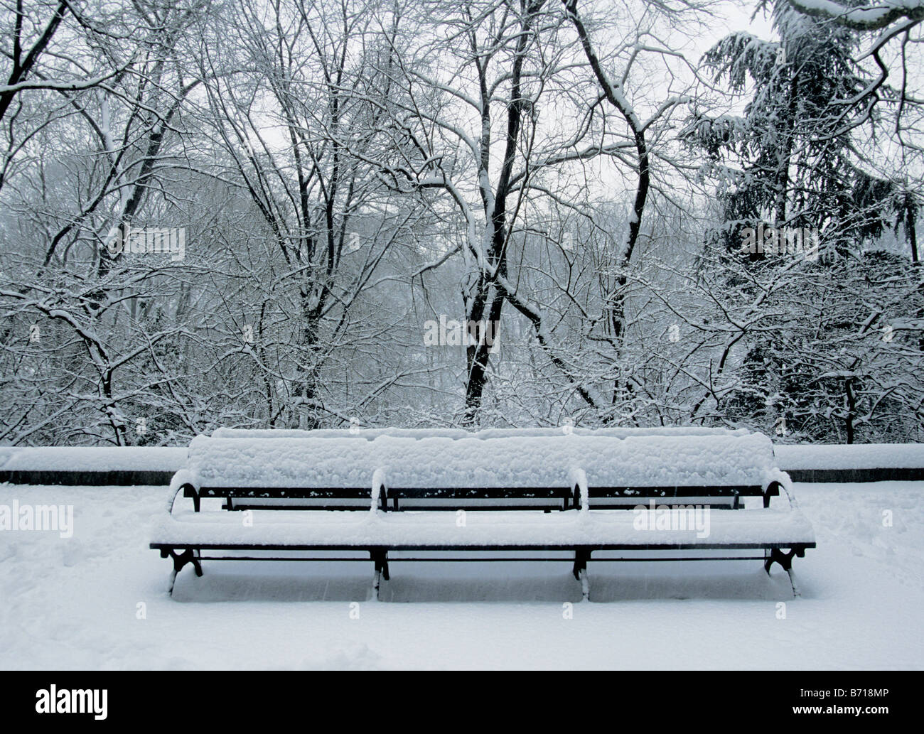 New York City Central Park Bench Covered In Snow Usa Stock Photo