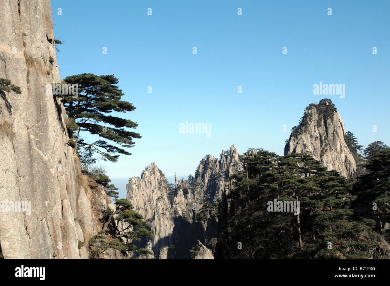 Pine tree growing out of granite mountainside, Huangshan, Yellow Mountain Area, China. - Stock Image