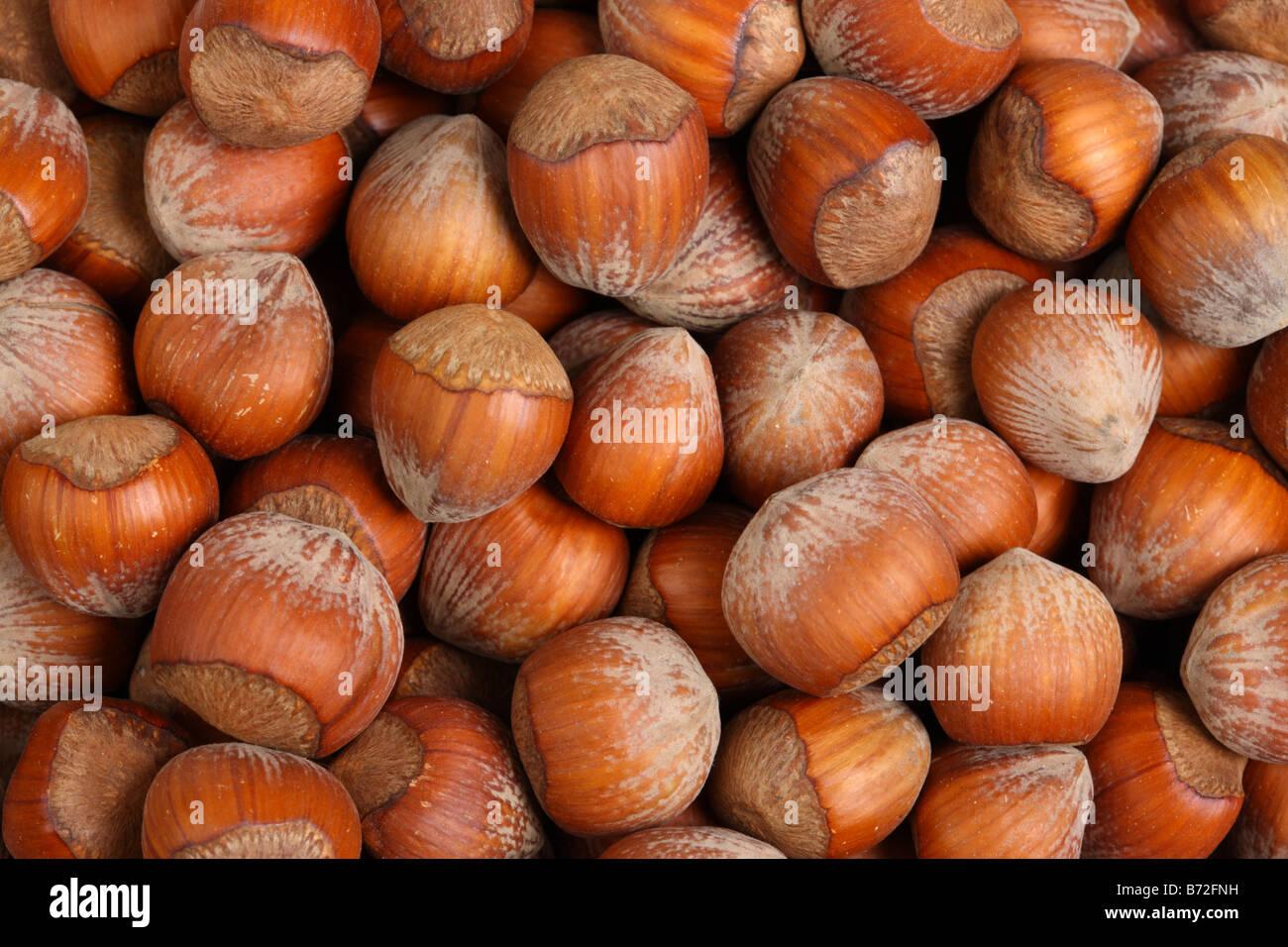 Background texture of hazelnuts - Stock Image