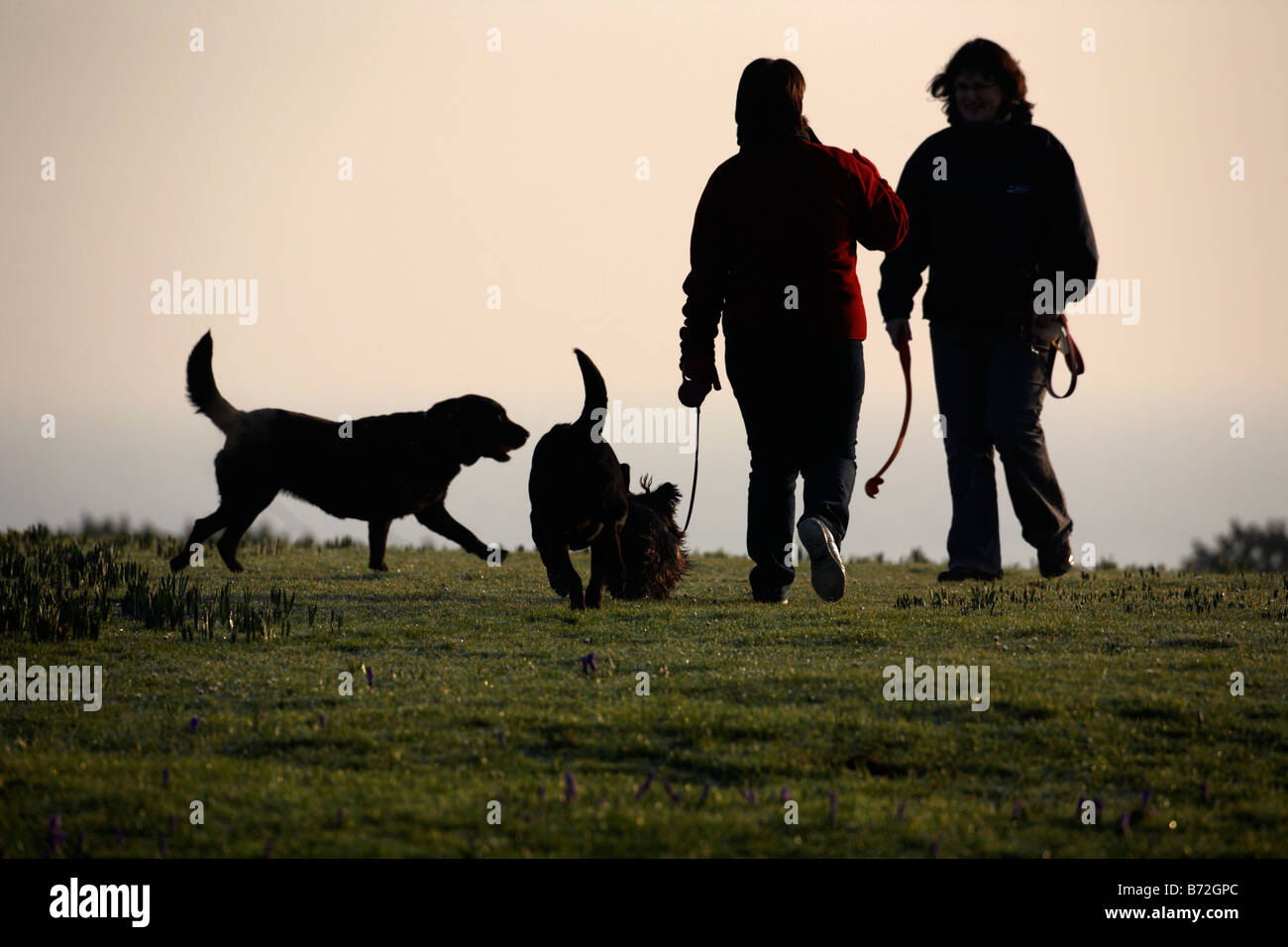 two women out walking thee dogs in morning light county down Northern Ireland UK Stock Photo