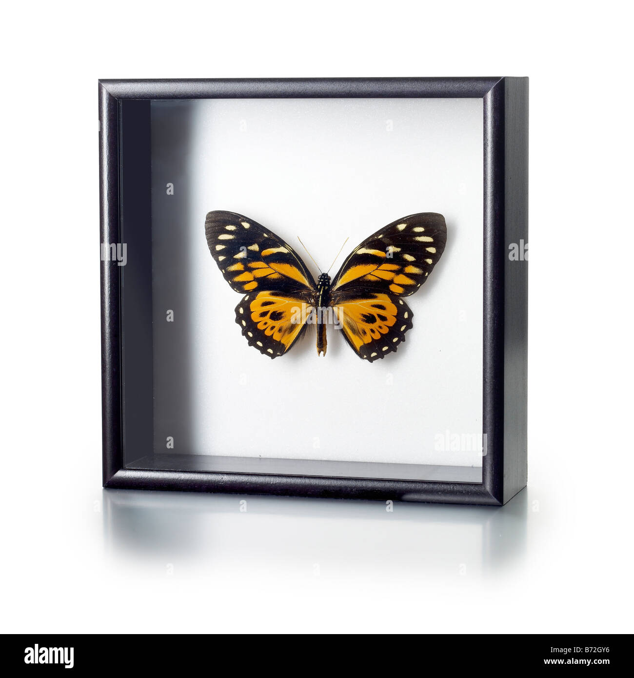 Framed Butterfly Stock Photos & Framed Butterfly Stock Images - Alamy