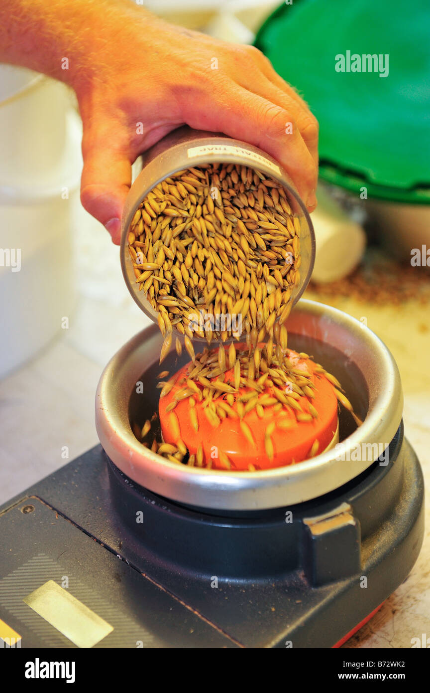 Taking a moisture content reading of a grain sample - Stock Image