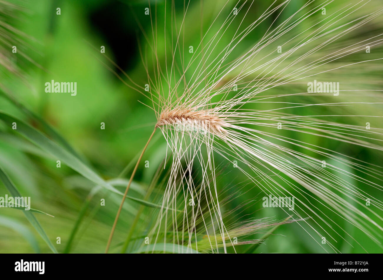 Abstract ornamental grass green structure structural garden gardening - Stock Image