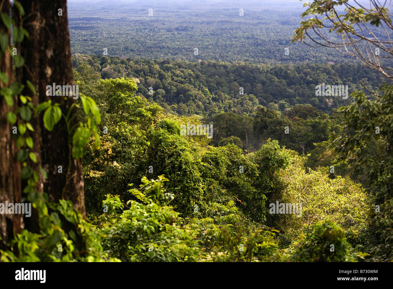 Suriname, Brownsweg, Brownsberg National Park. View on forest and Brokopondo lake. - Stock Image
