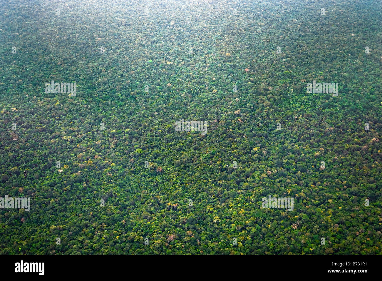Suriname, Laduani, at the bank of the Boven Suriname river. Aerial of forest. - Stock Image
