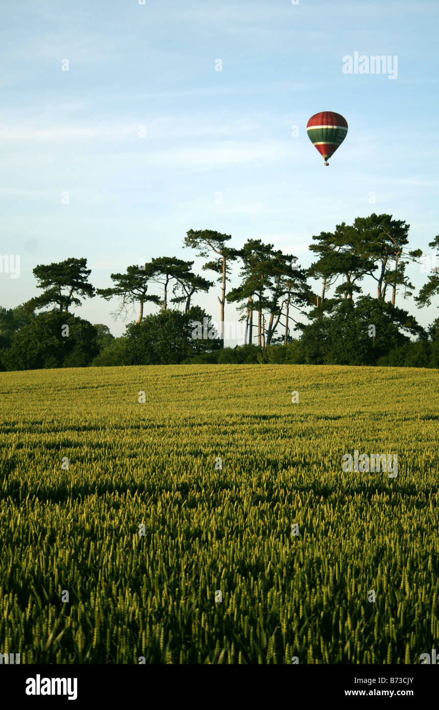A HOT AIR BALOON FLOATS ABOVE THE SOUTH DOWNS, SEEN ABOVE A WHEAT FIELD. - Stock Image