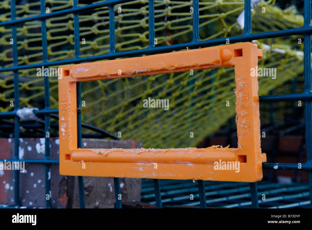 Turtle excluder device (TED) on crab trap - Stock Image