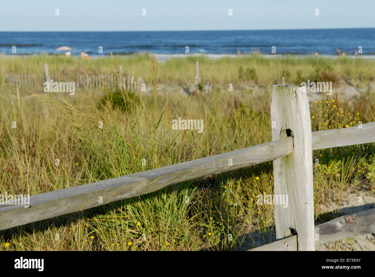 Beach with protected grasses on dunes for stabilzation and preservation from erosion, Avalon, New Jersey. - Stock Image