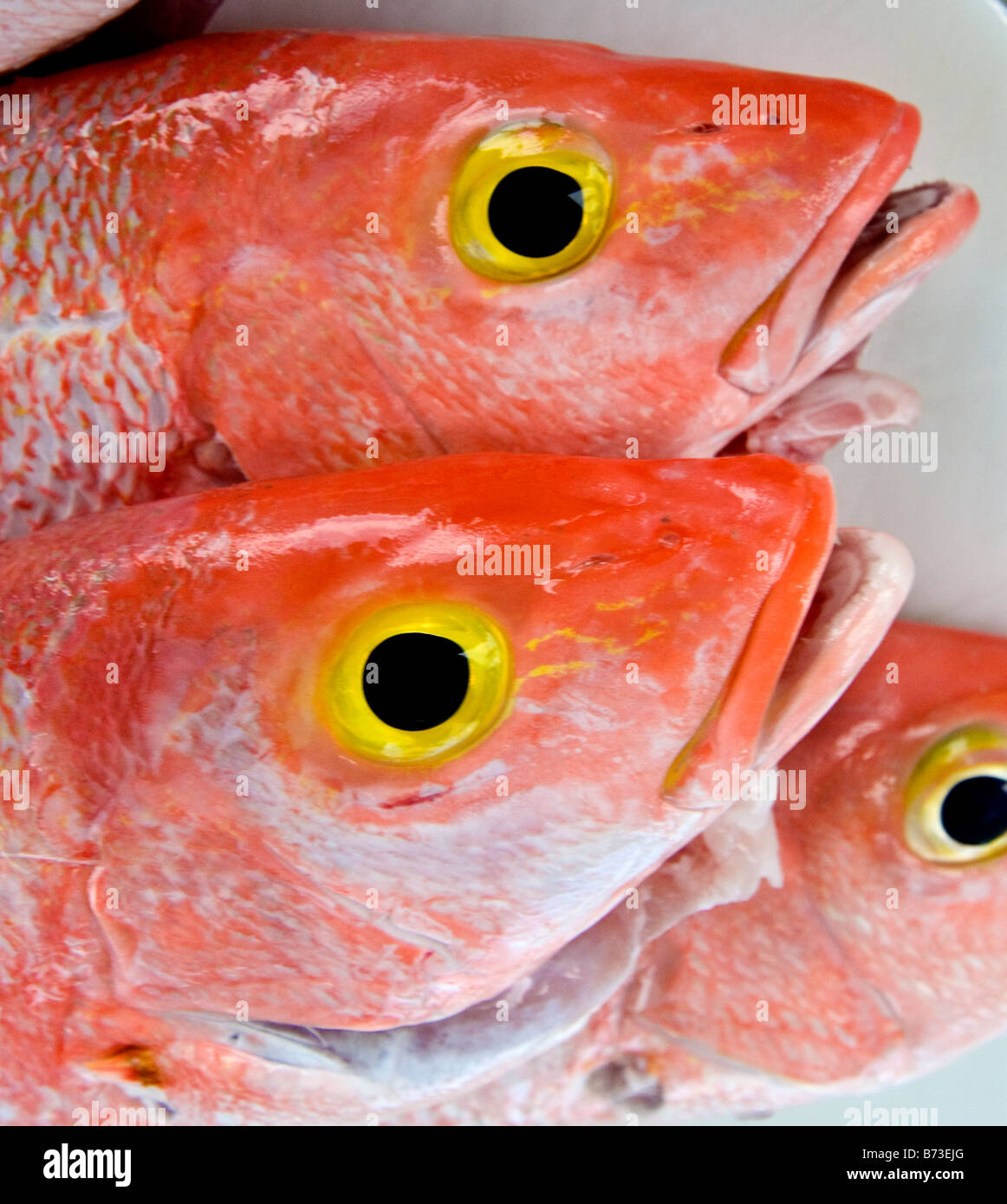 Colorful fresh, red snapper fish at dock, Miami Beach, Florida Stock ...