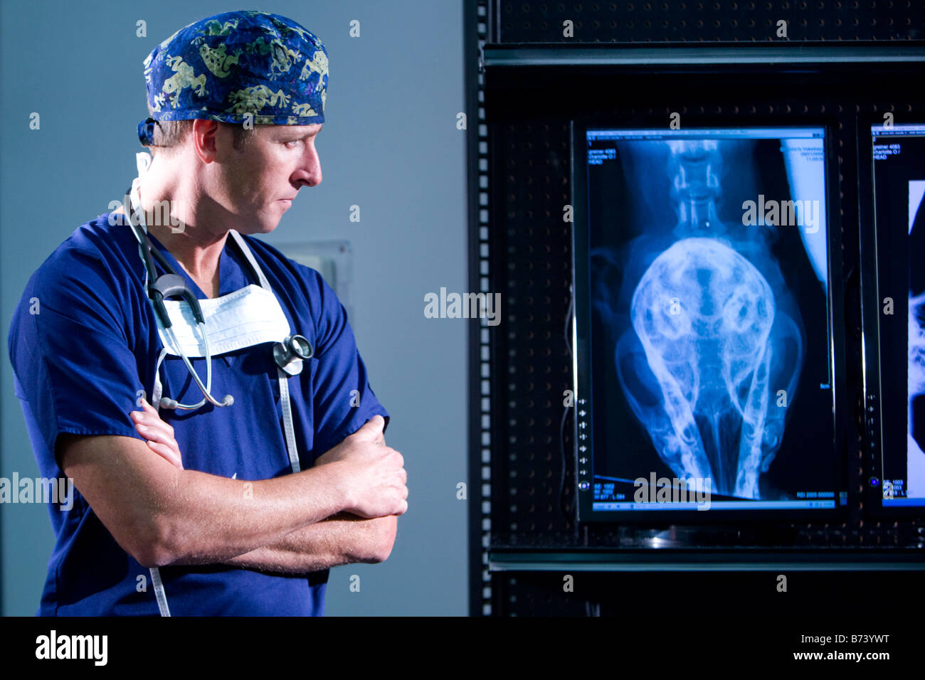 Veterinarian looking at animal x-rays - Stock Image