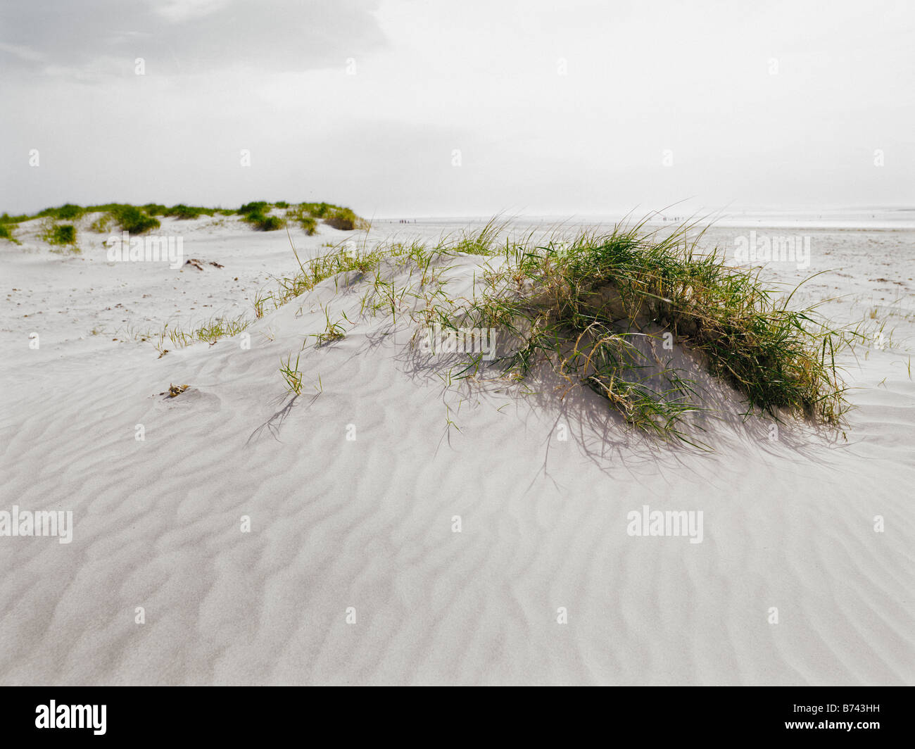 Sand dunes on beach with tufts of seagrass - Stock Image