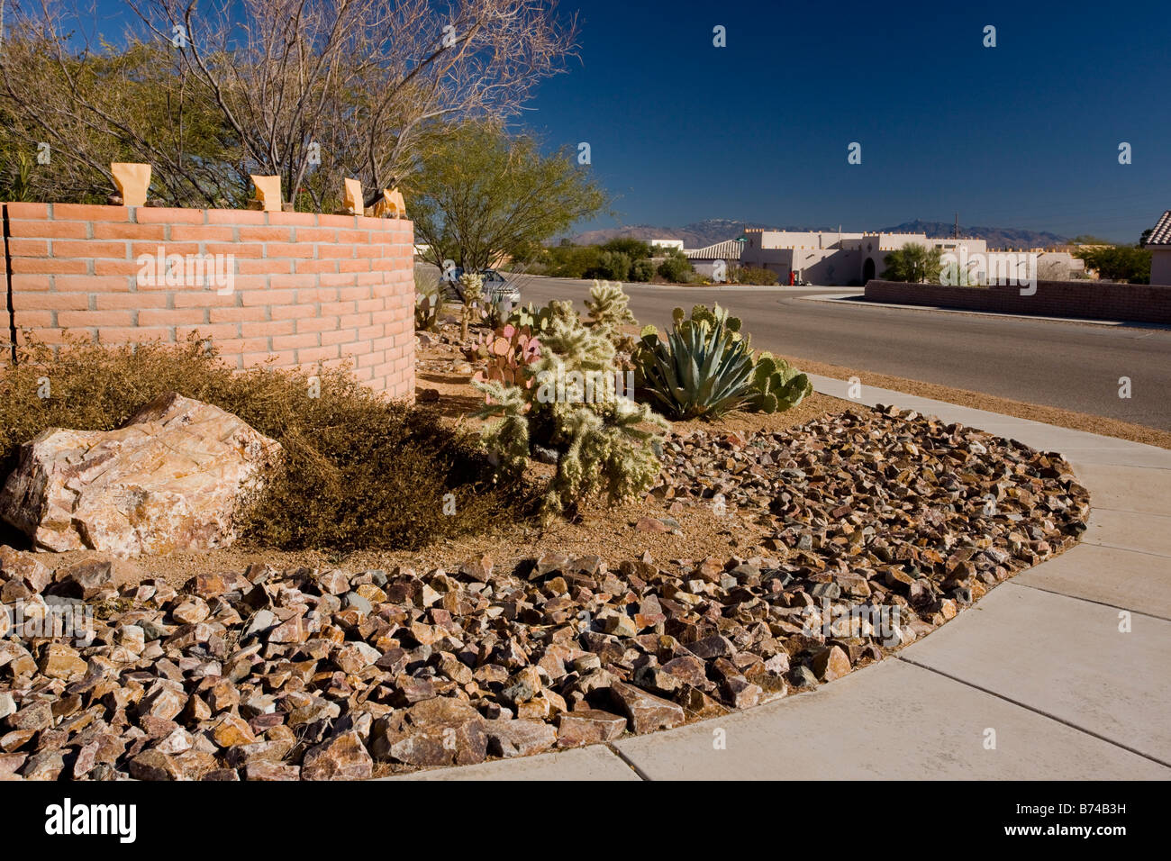 Desert gardening using drought resistant species in a low rainfall