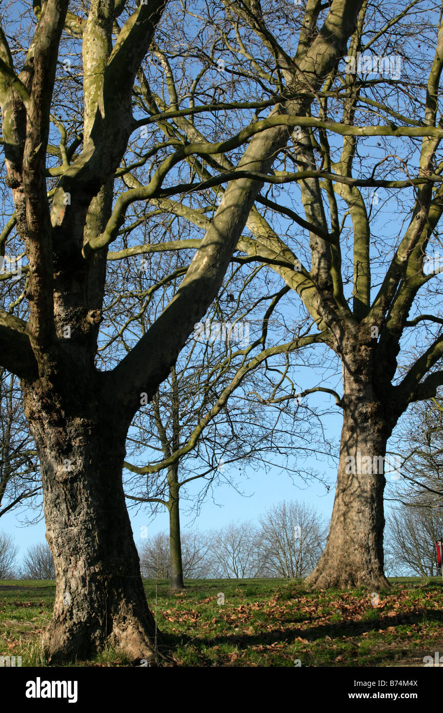 Shot near the entrance to Hilly Fields Park from Vicar's Hill, Ladywell, Lewisham - Stock Image